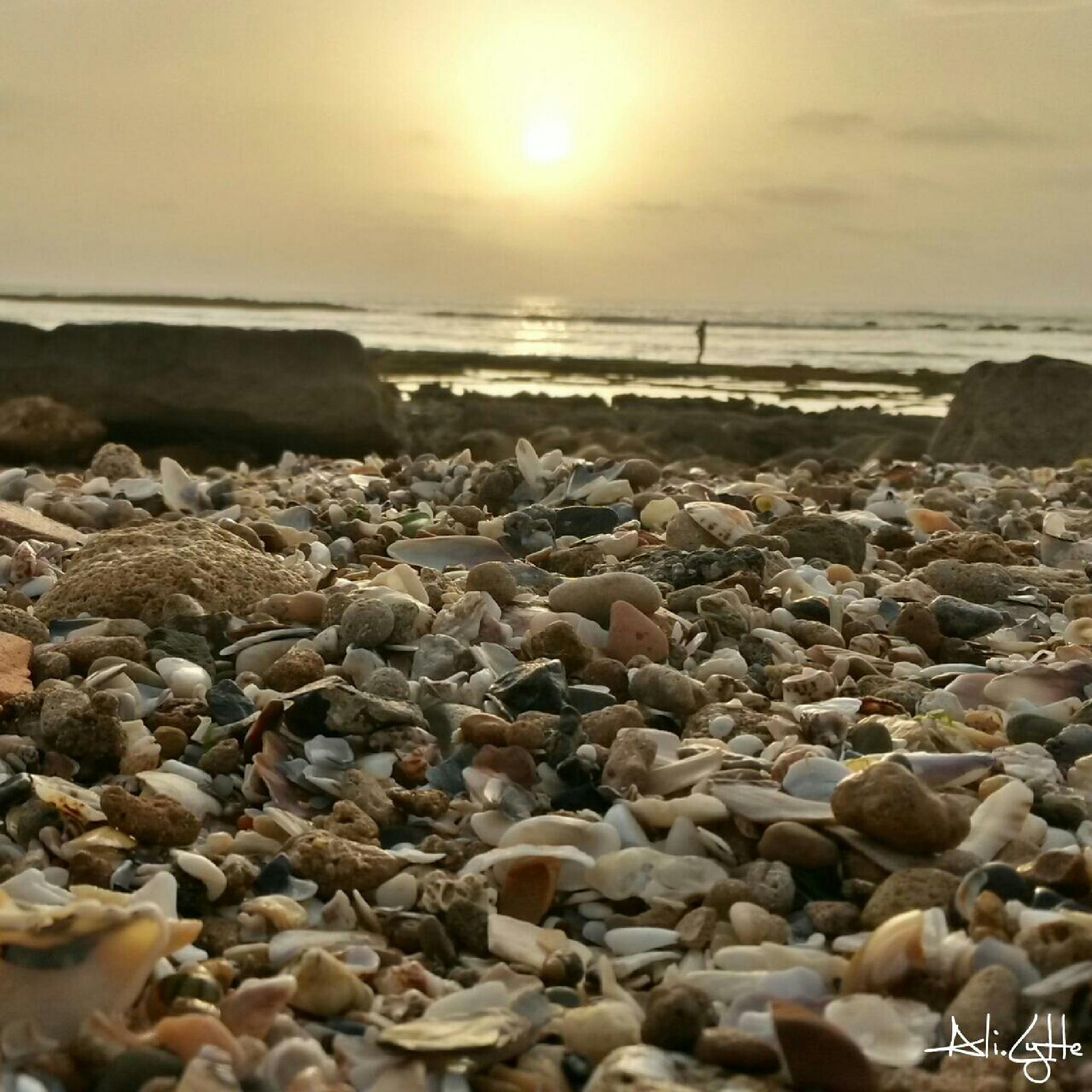 Wild Beach by ALI LYTTE