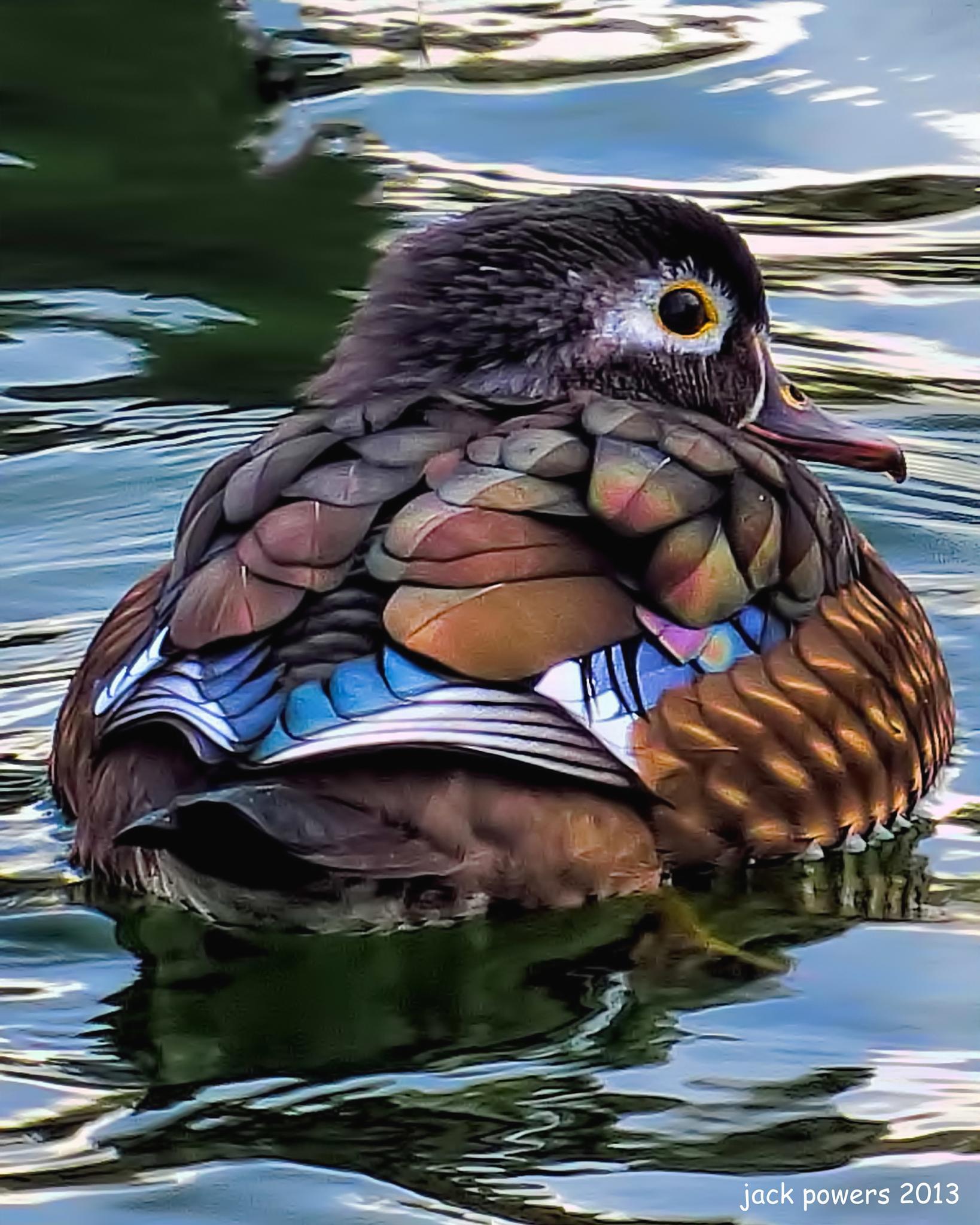 Wood Duck by jpowersrrt