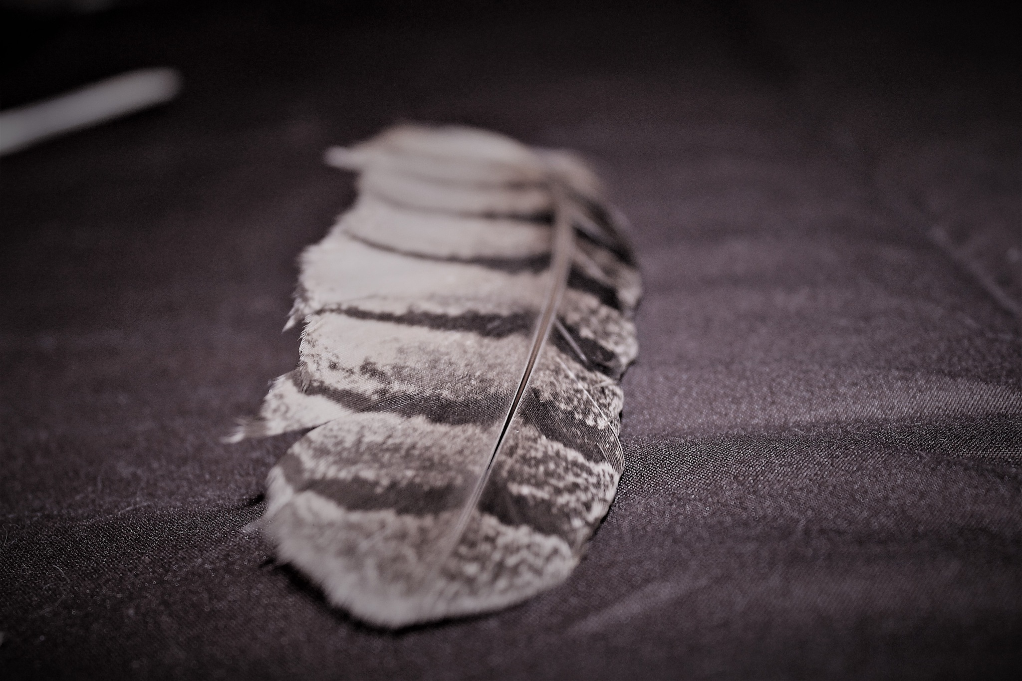 Feather by craig.turner.756