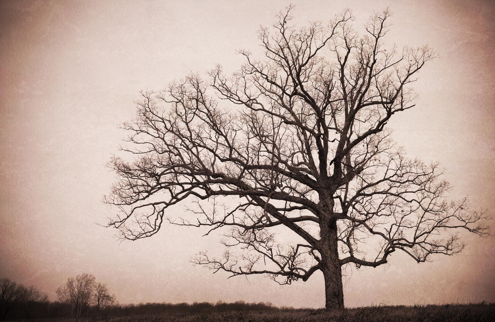 Scary Tree by rick.moss.654
