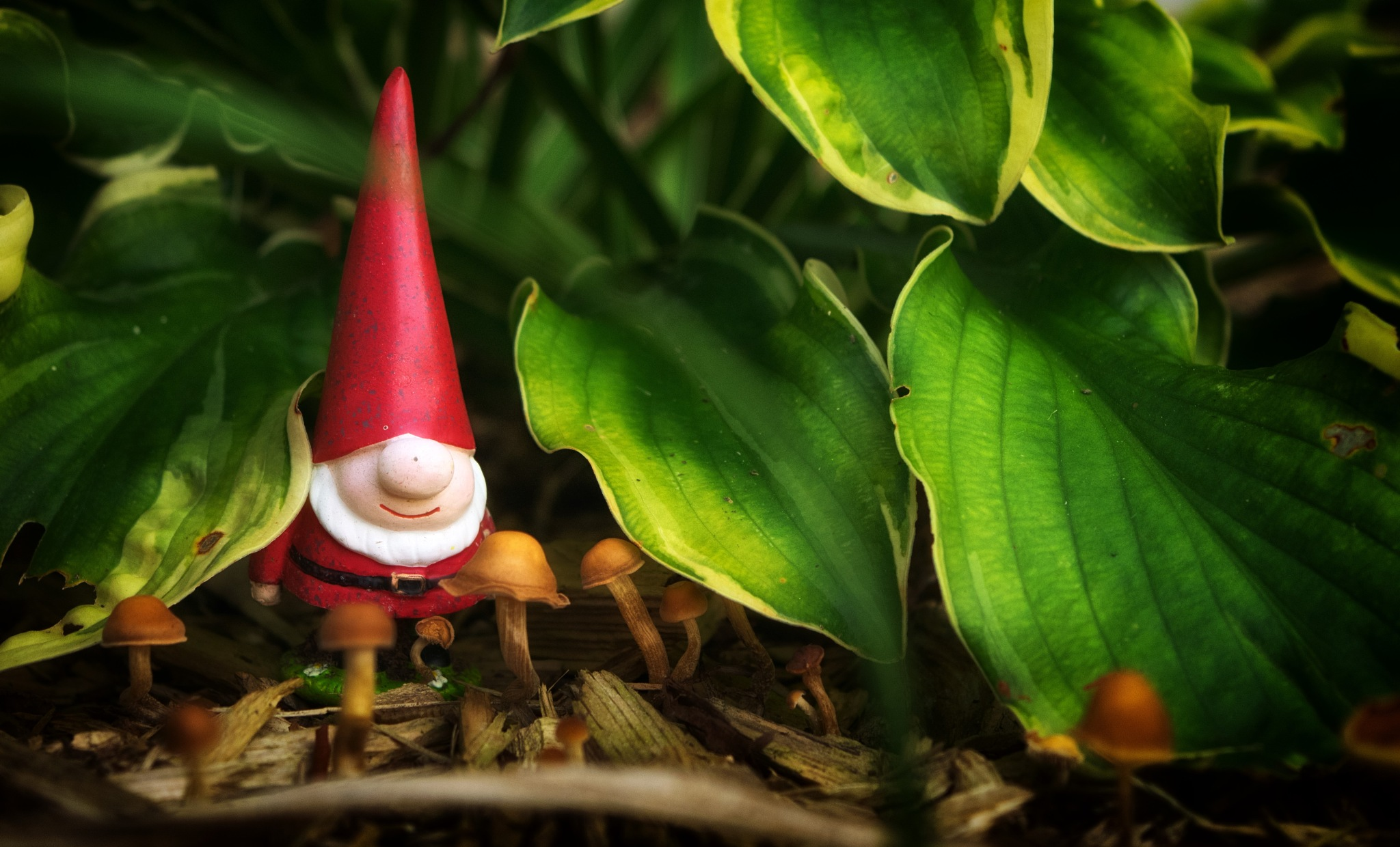 Garden Gnome by rick.moss.654