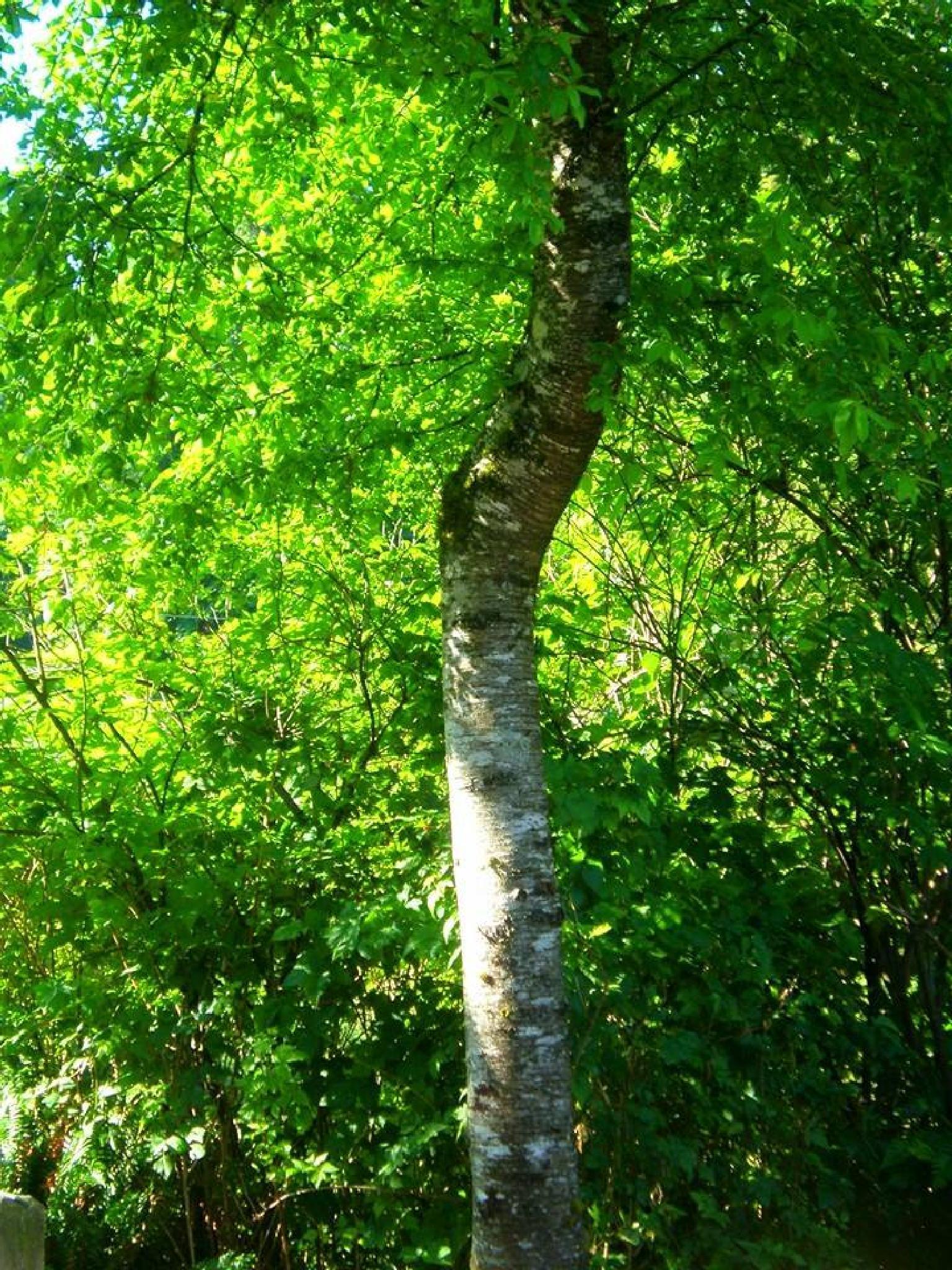 Beauty in Green by Kuler1