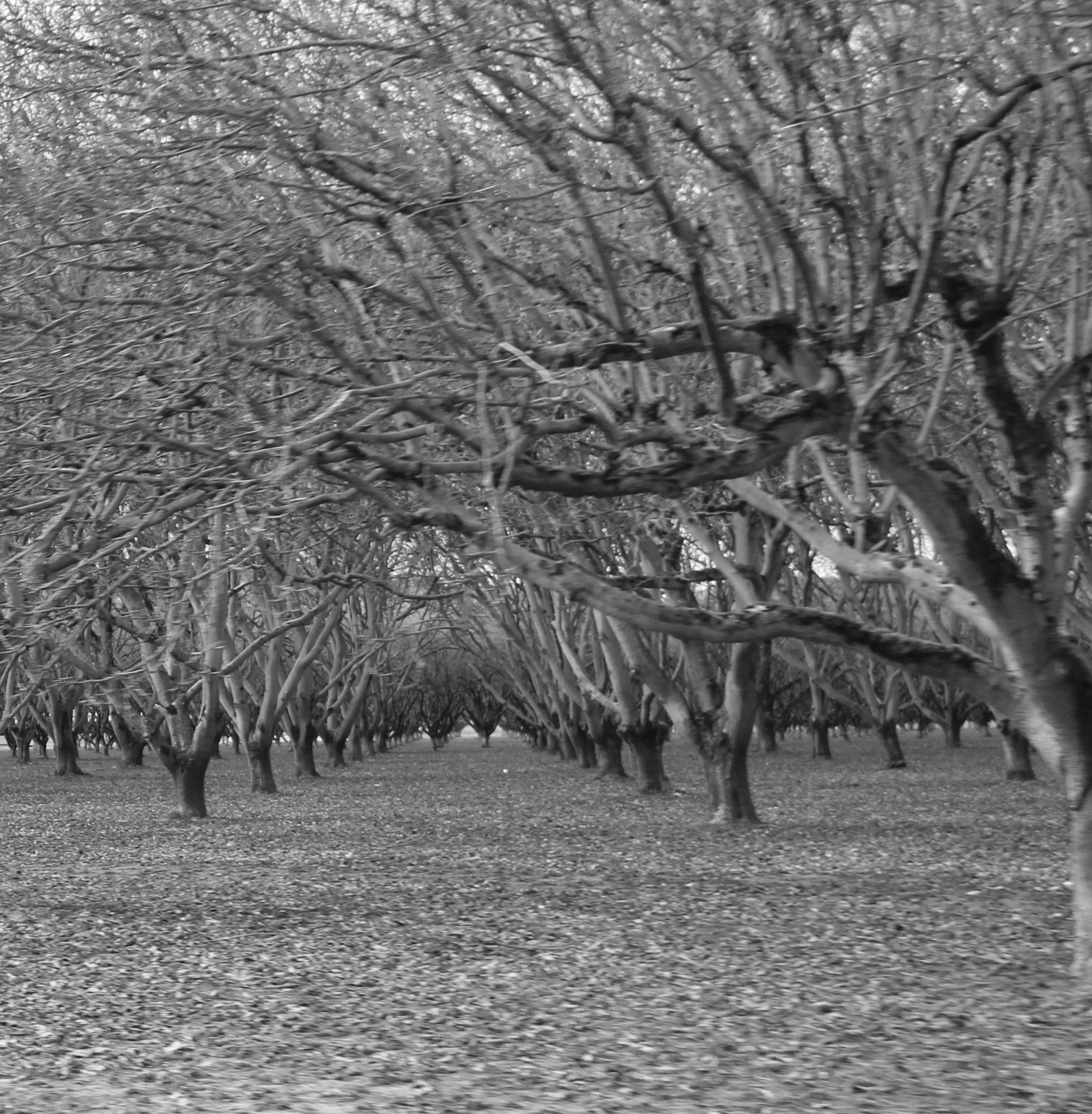 Barren Land by Mimipics