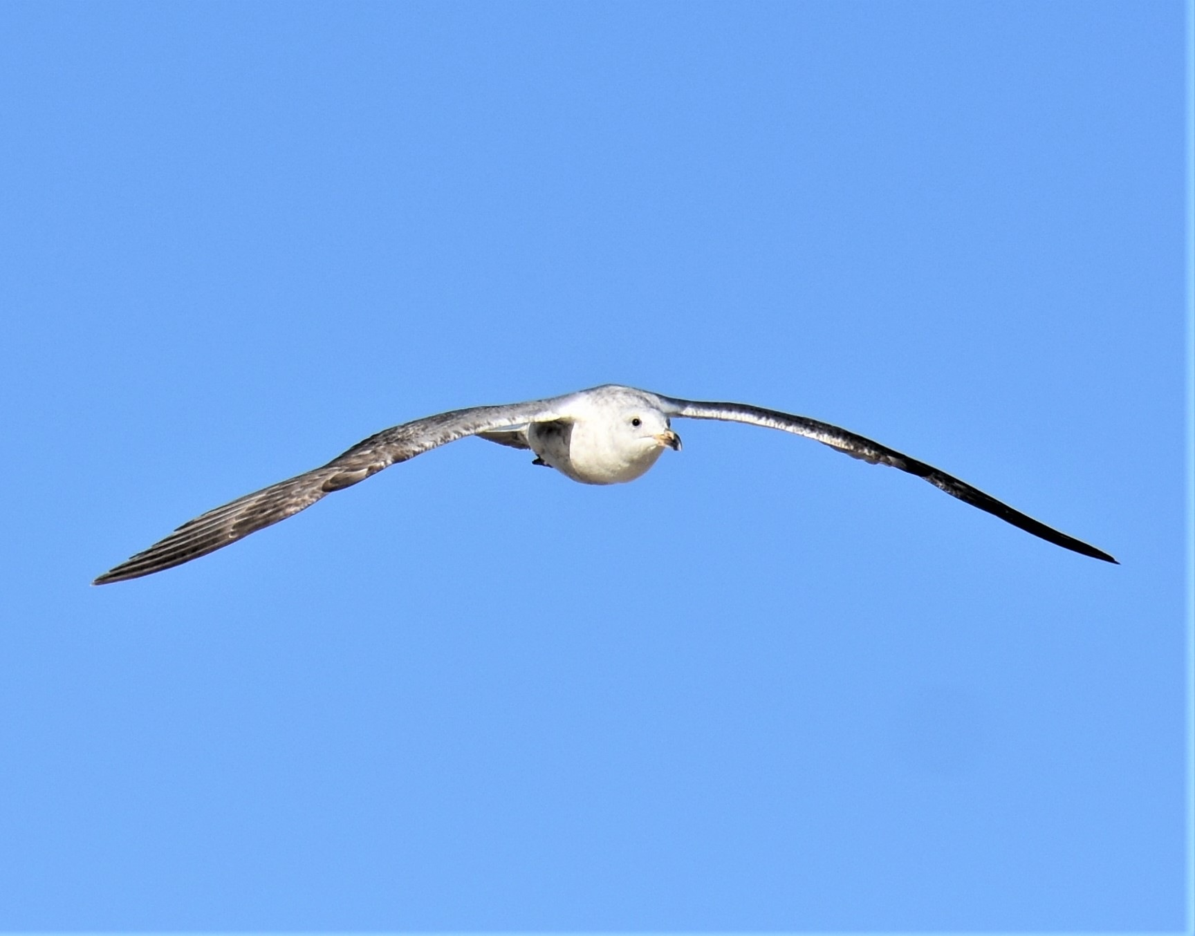 In flight by deanna.polk