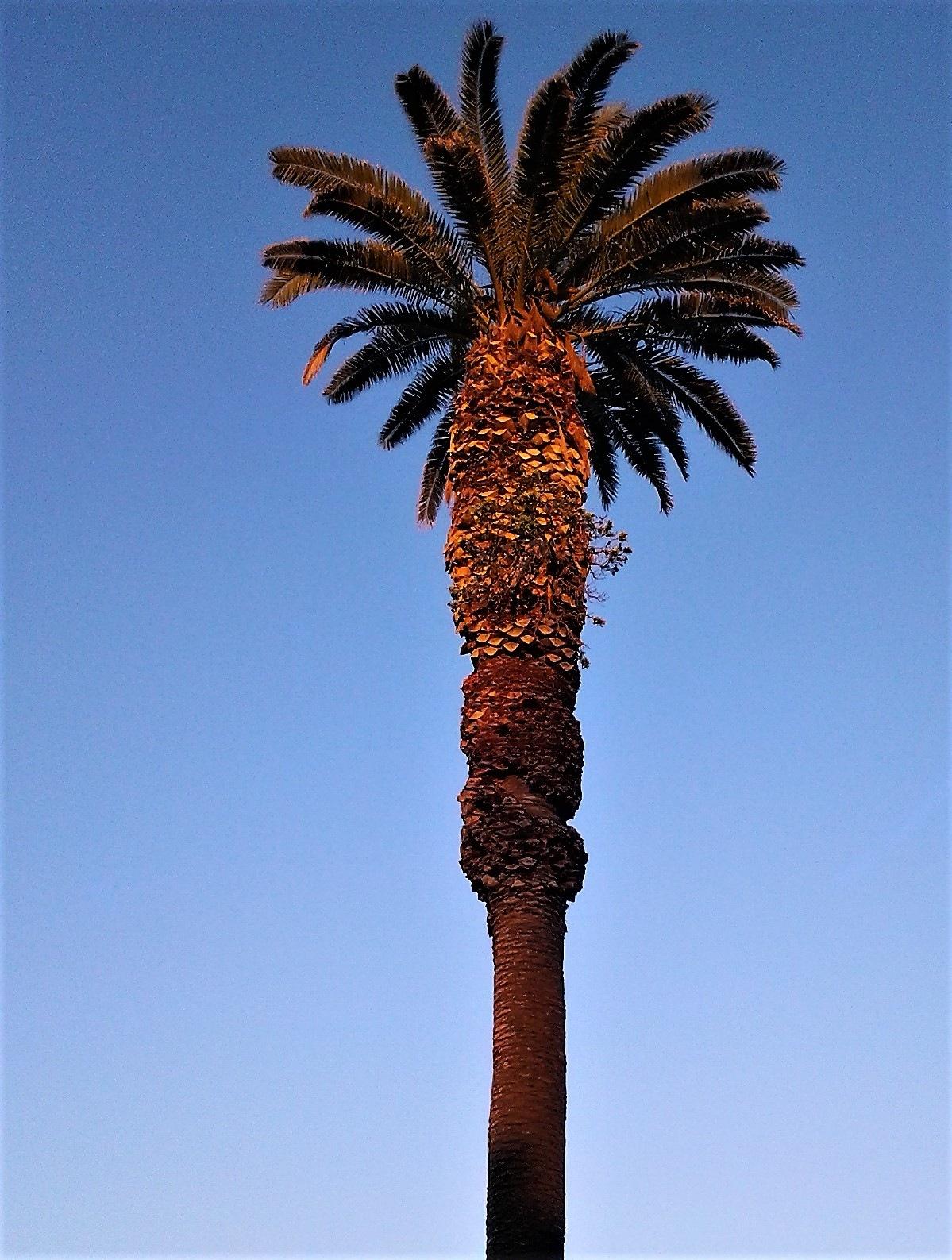 Sunset palm by deanna.polk