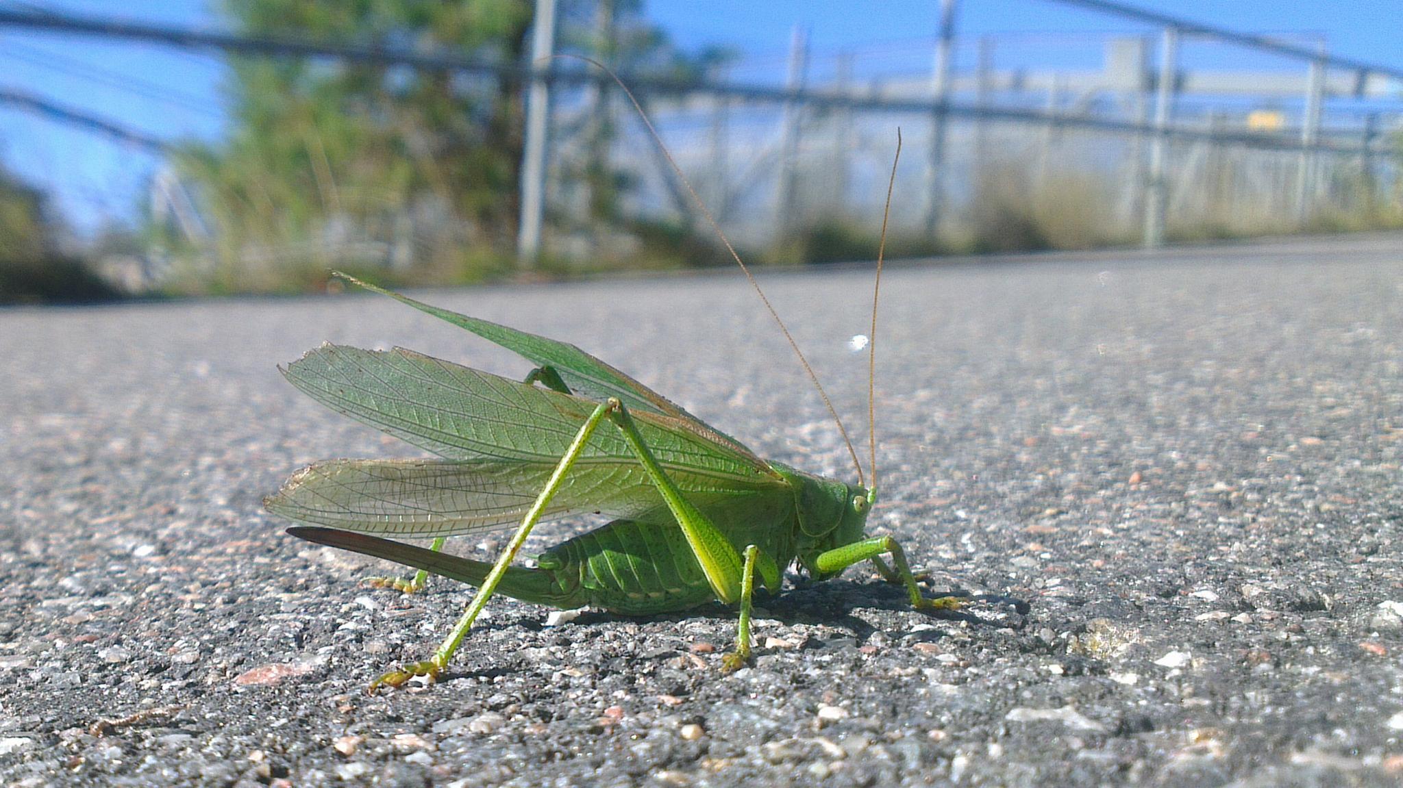 cricket by amabrawyin