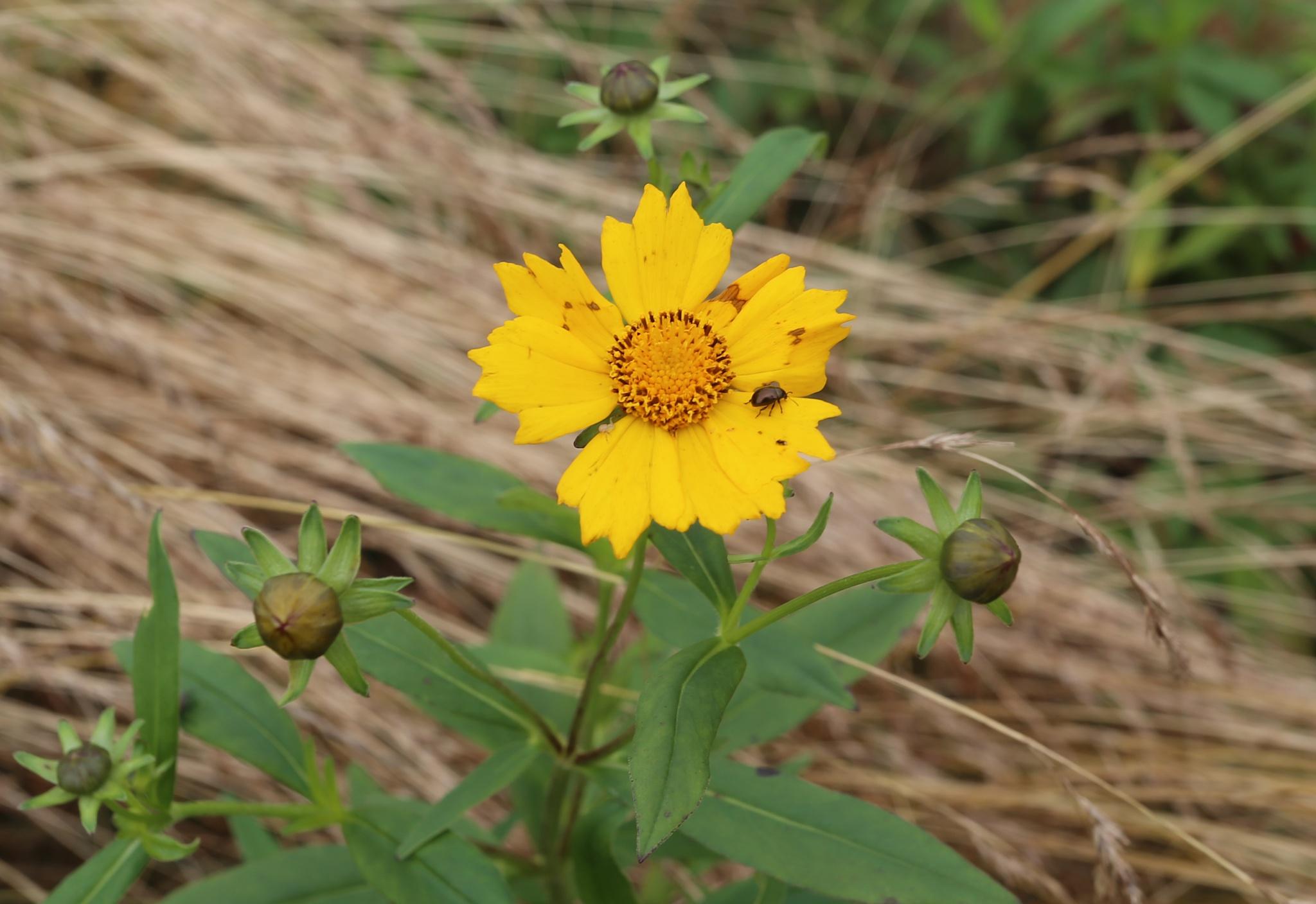 Wildflower by JepThor