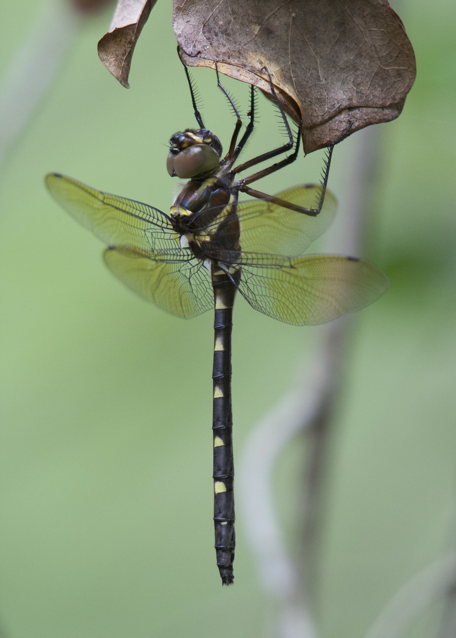 DragonFly by JepThor