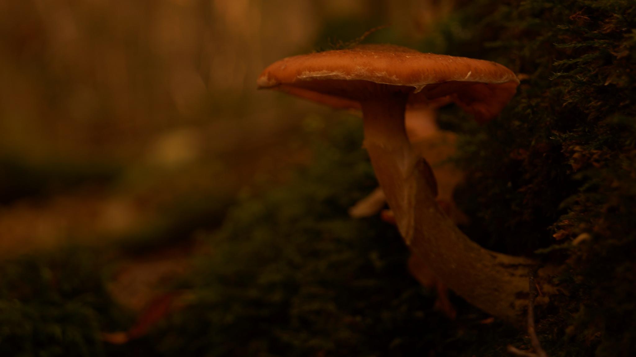 In het donkere bos verscholen deze prachtige paddestoel by frank.bruls