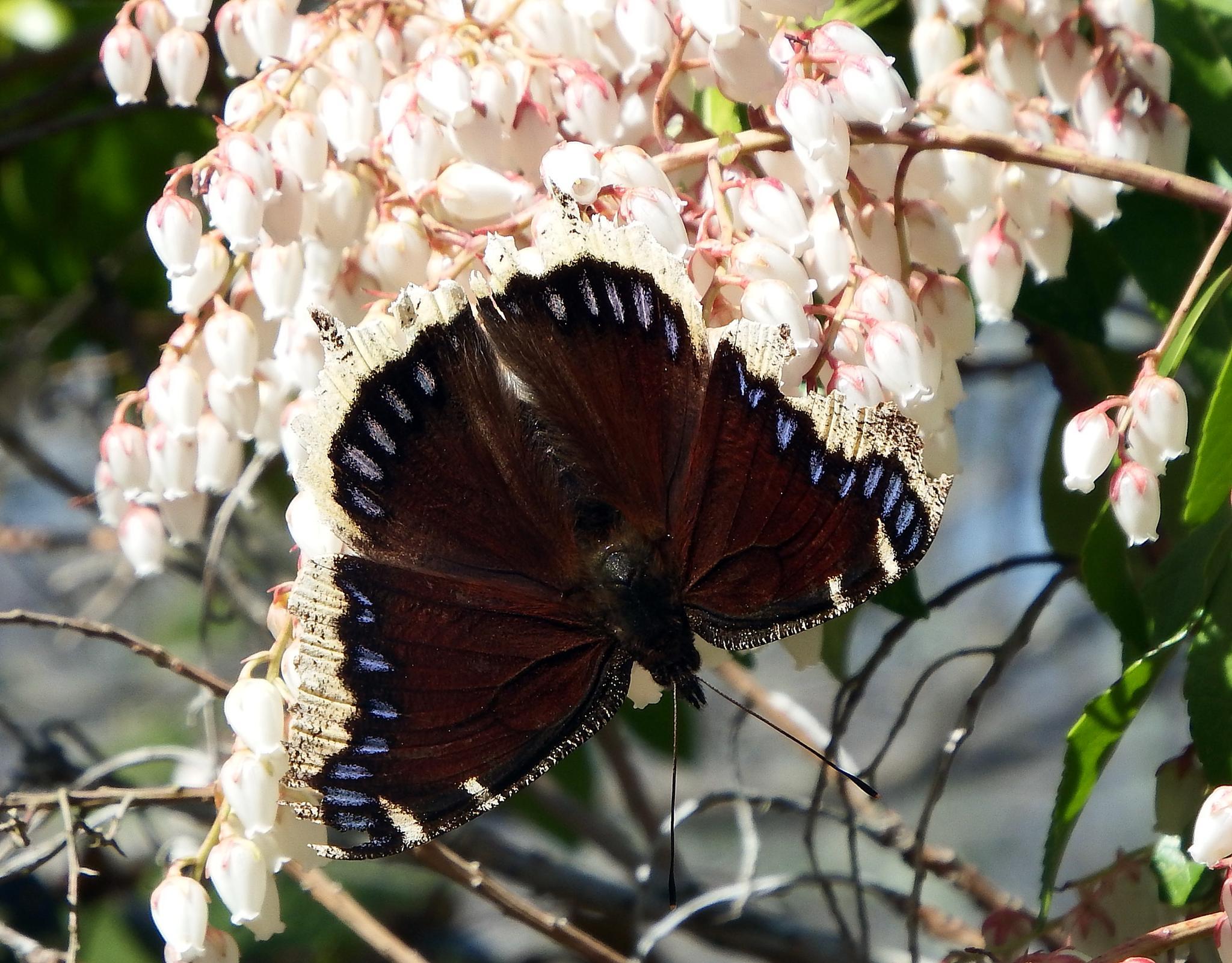Pretty butterfly by Antonette Stiebritz