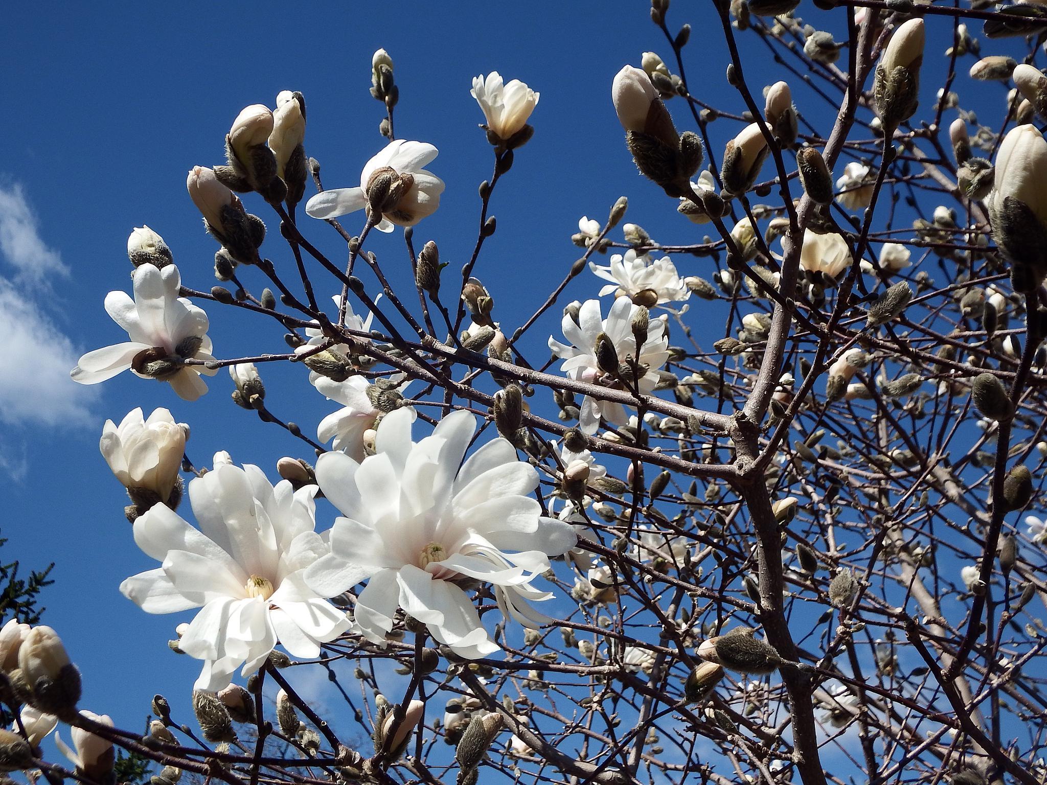 April Blooms by Antonette Stiebritz