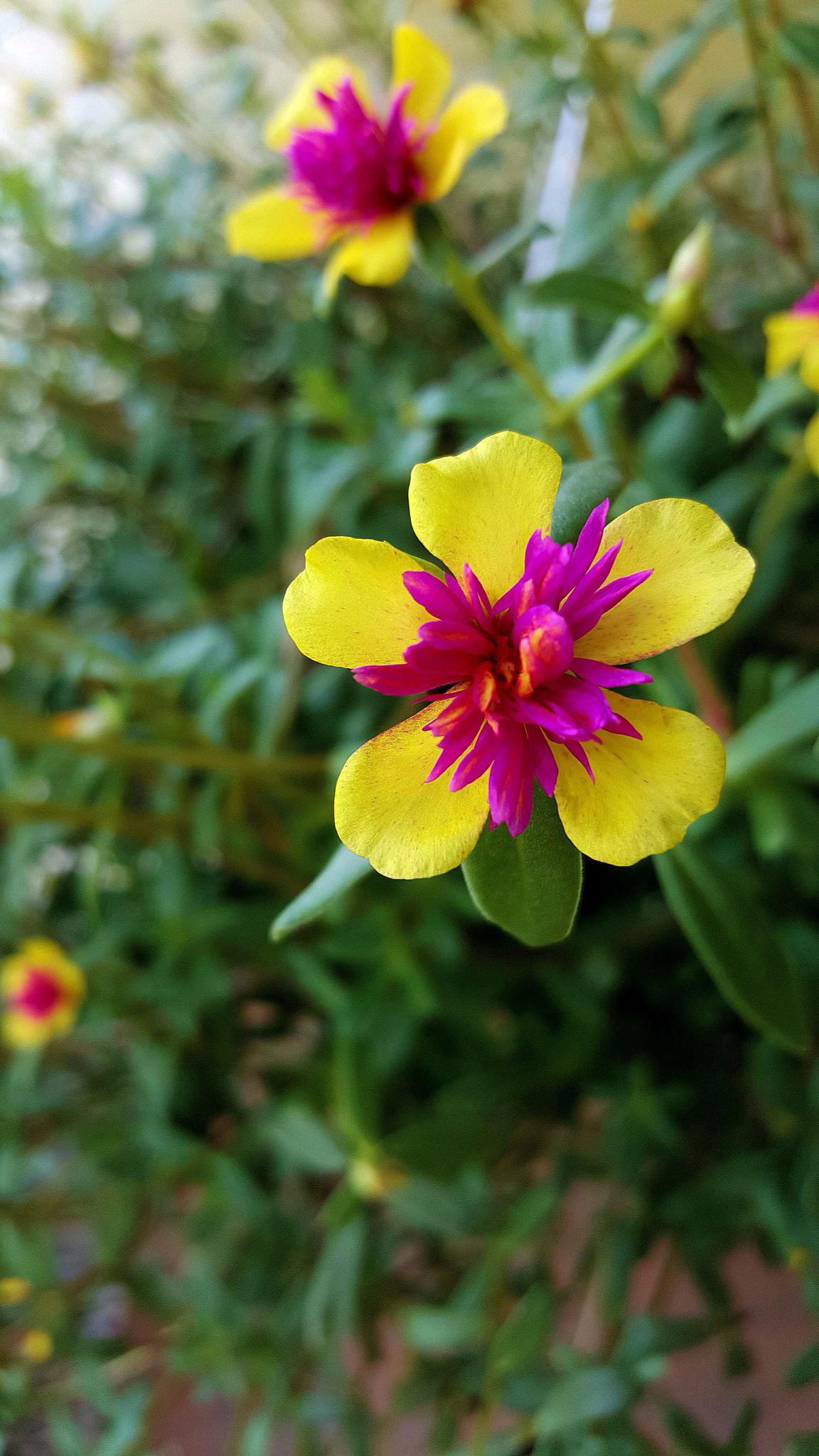 Mom's Flowers 1 by Antonette Stiebritz