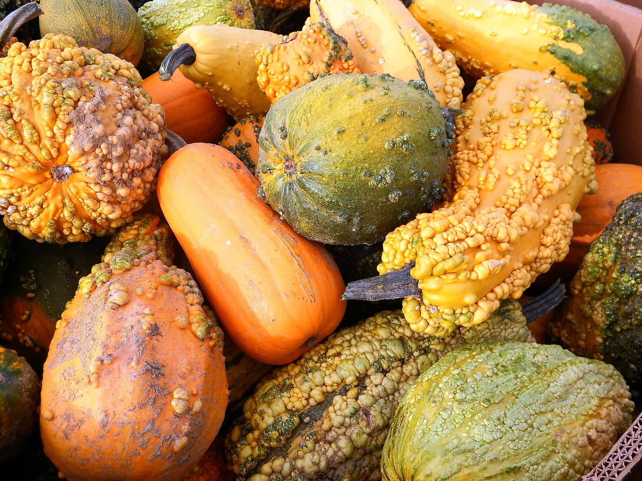 Lots of Gourds! by Antonette Stiebritz