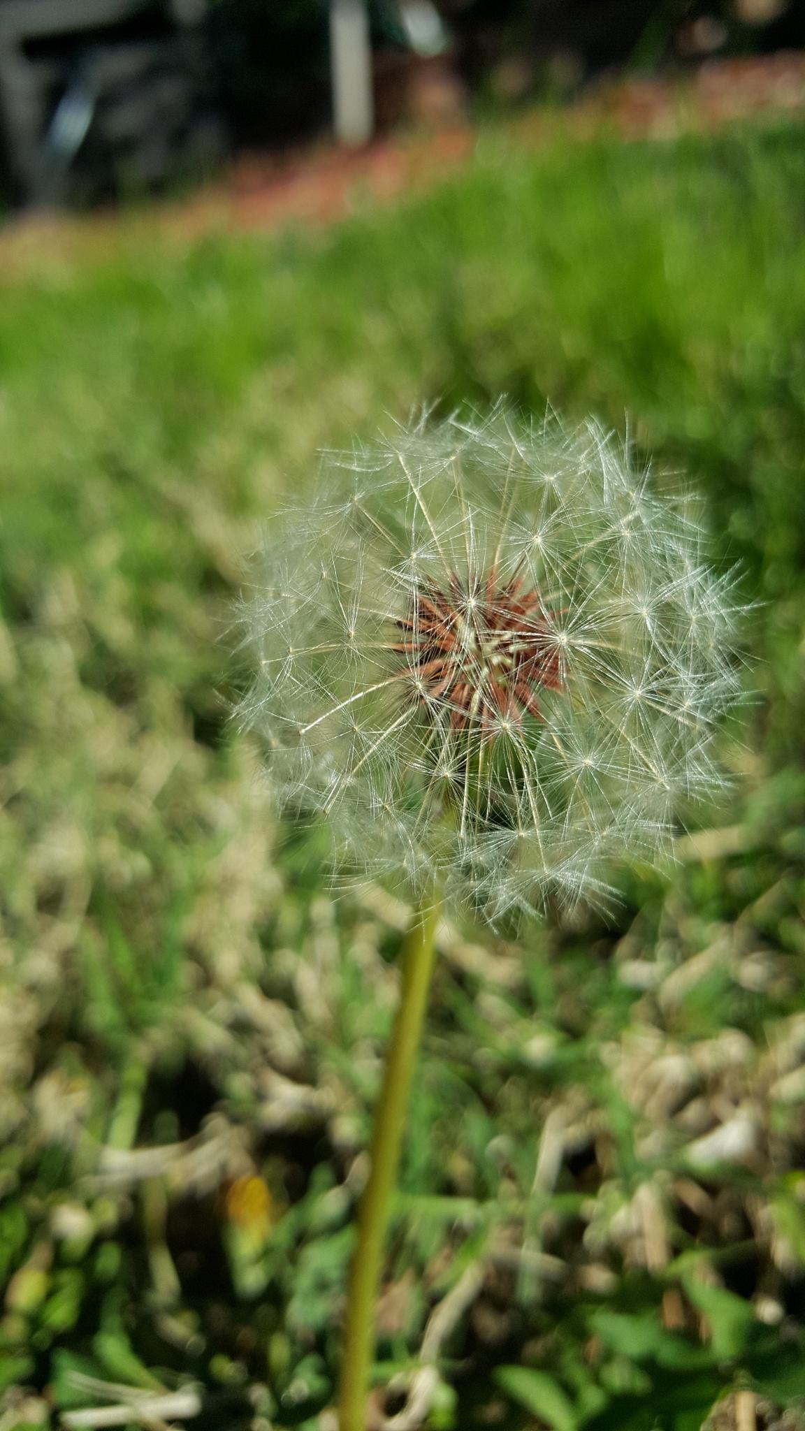 .Massenger flower by mfarhidar