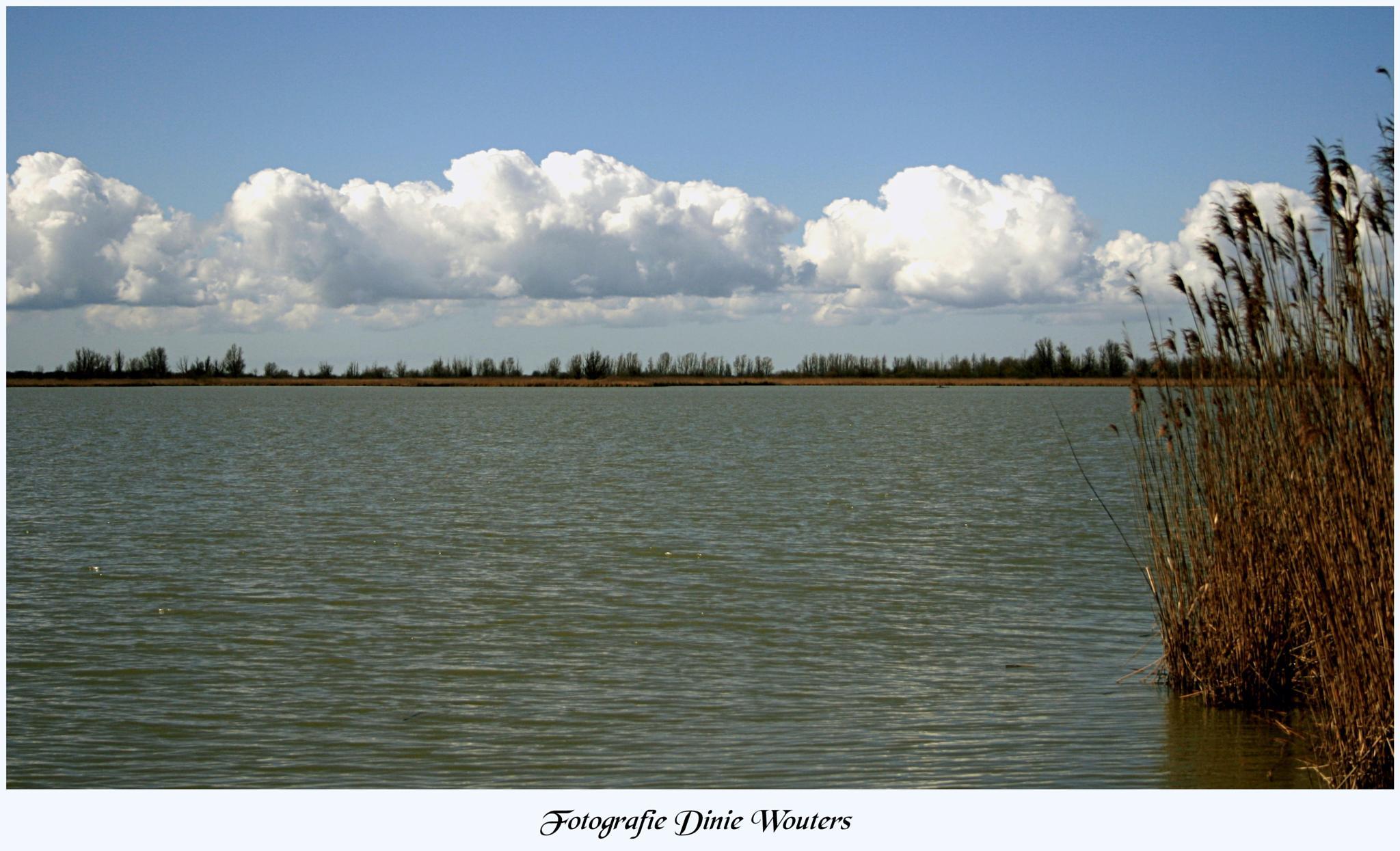 Landscape Ooievaars Plassen by Dinie