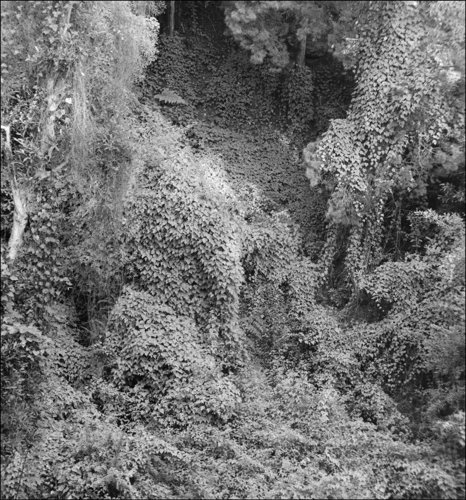 A Cascade of Foliage by Ozroo