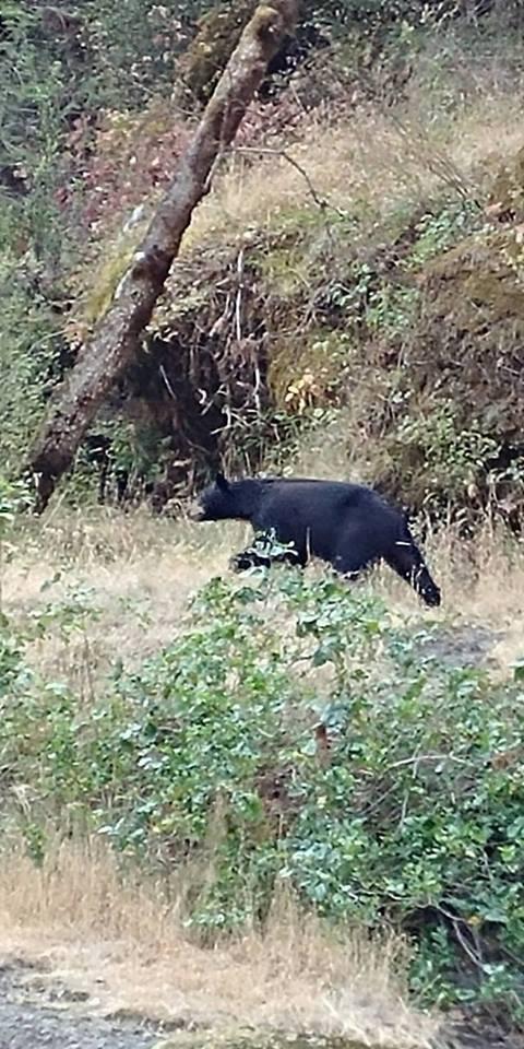 A Bear by marilyn Simkin