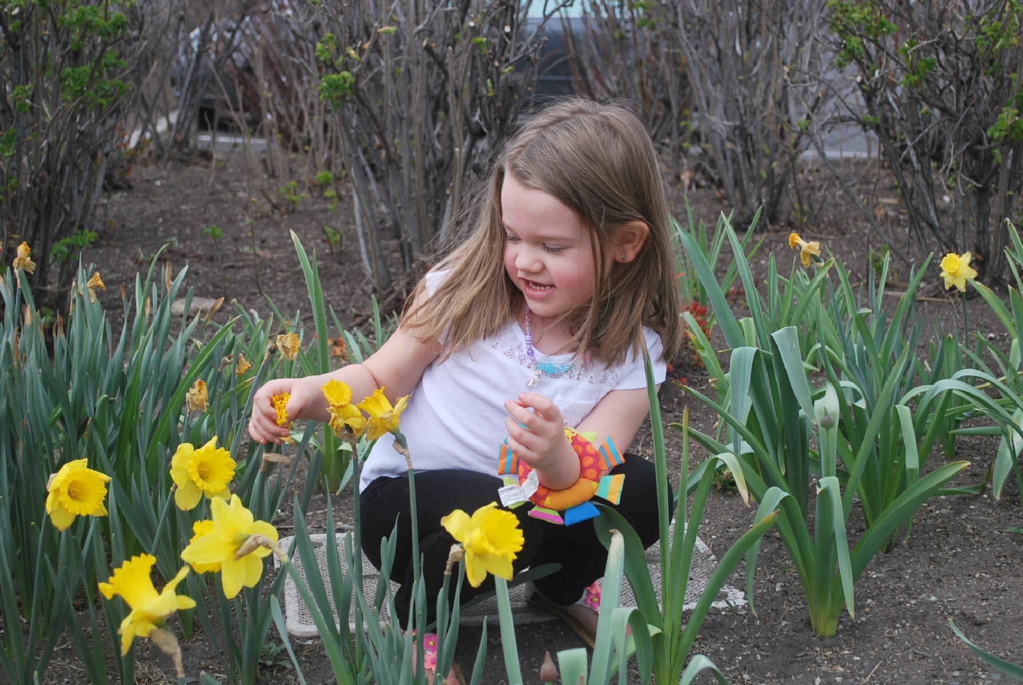 Daffodil Garden and Addie by marilyn wirtz