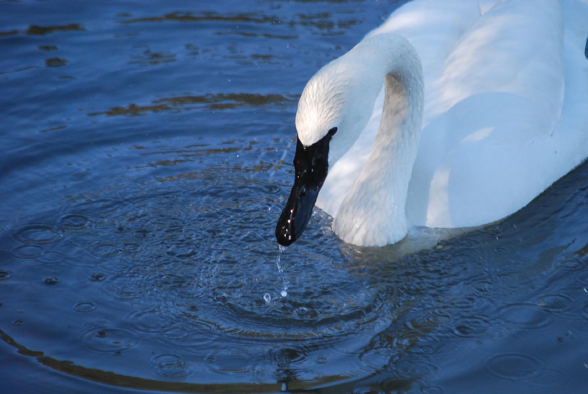Water dripping off the beak by marilyn wirtz
