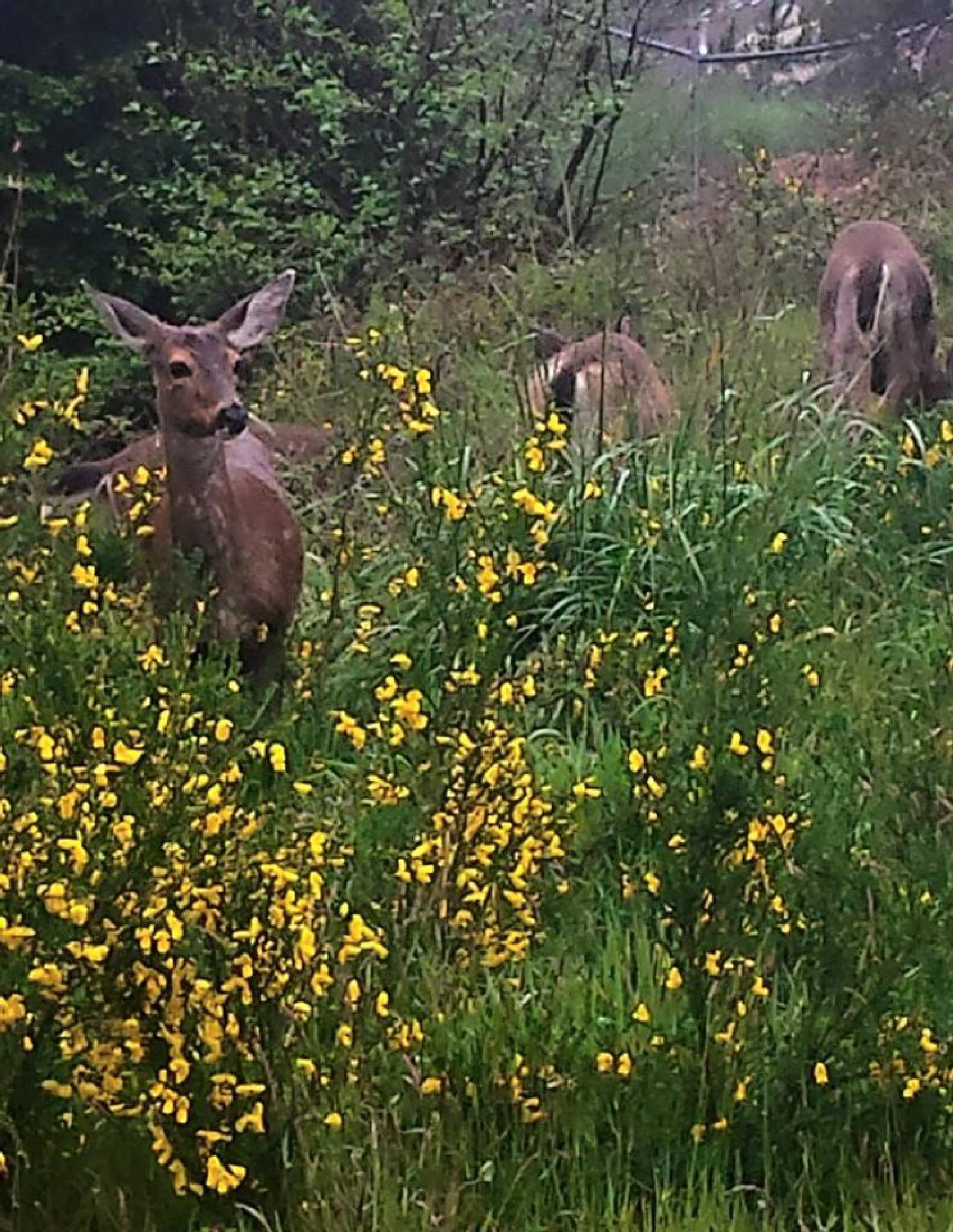 Deer in a field of flowers by marilyn wirtz