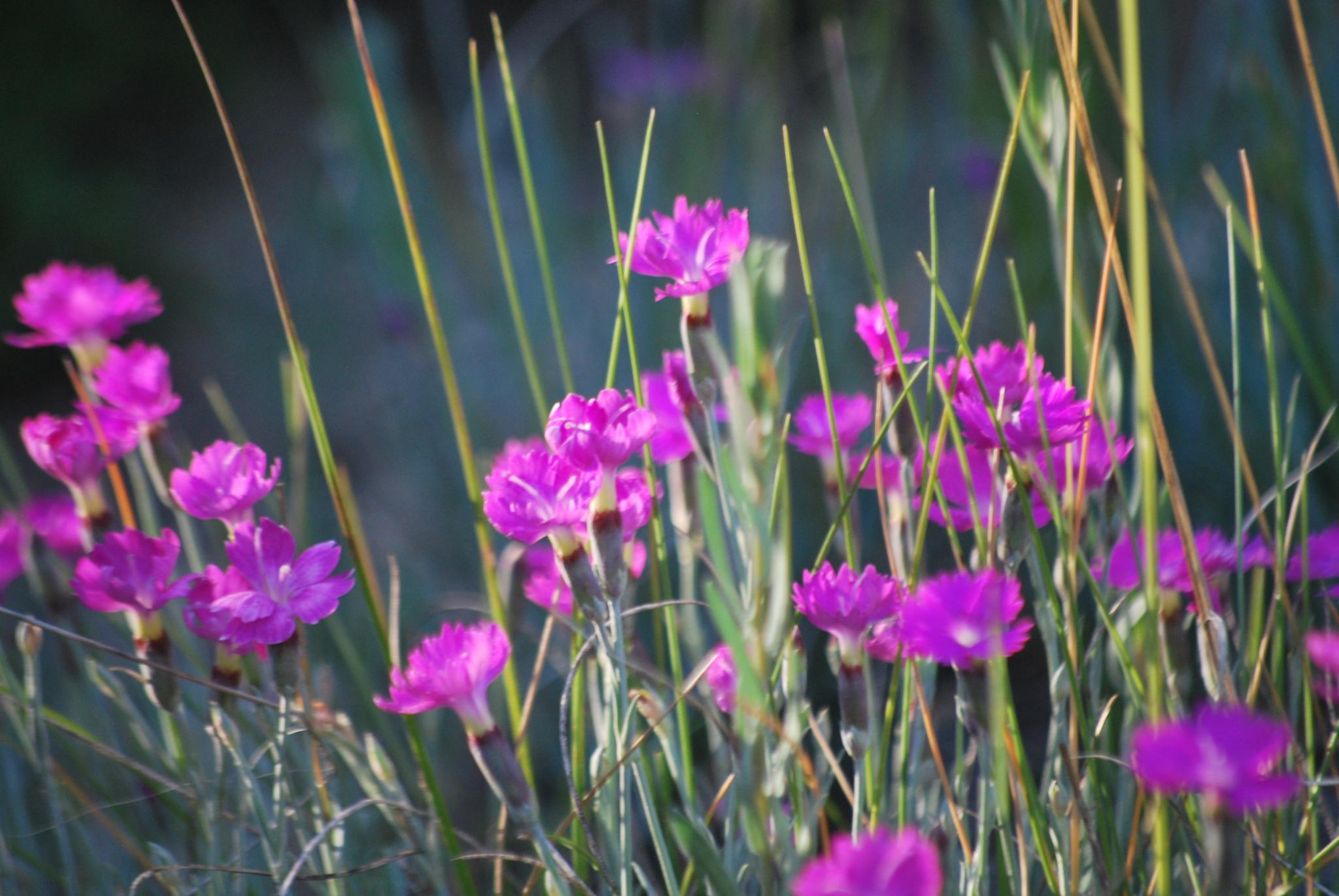 Little pink flowers  by marilyn wirtz