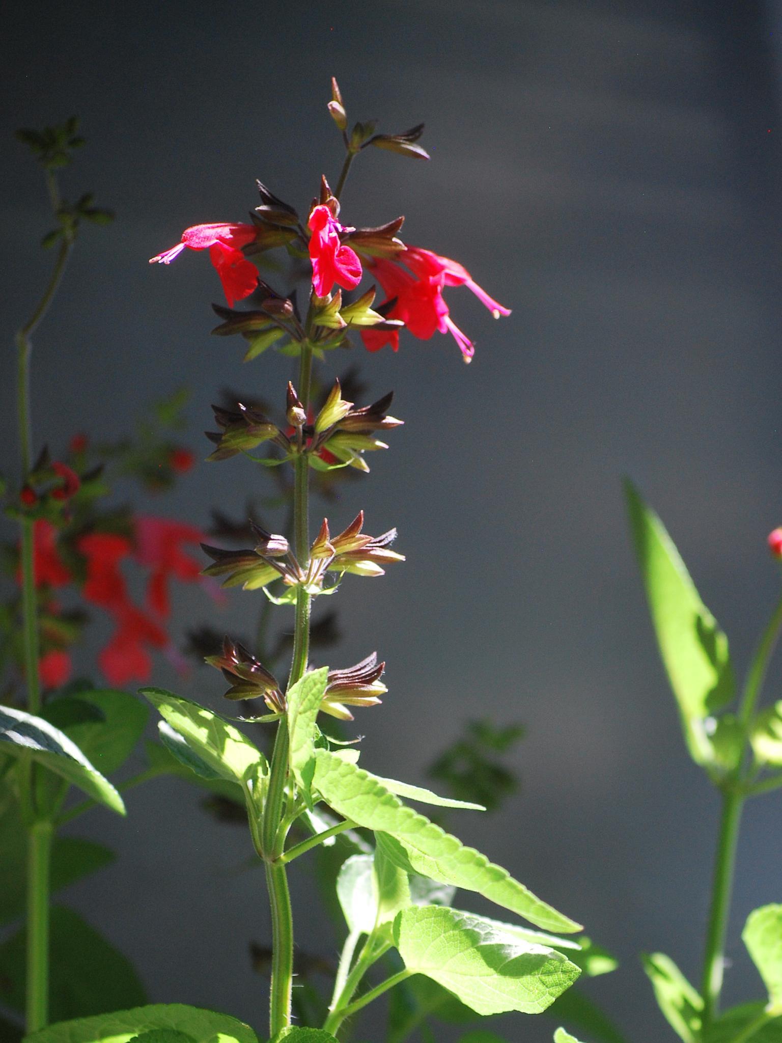 Window box flowers by marilyn wirtz
