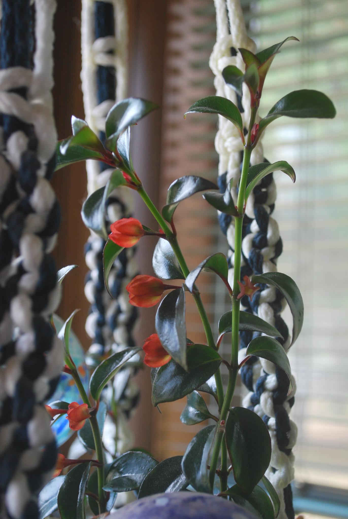 Lipstick plant by marilyn wirtz