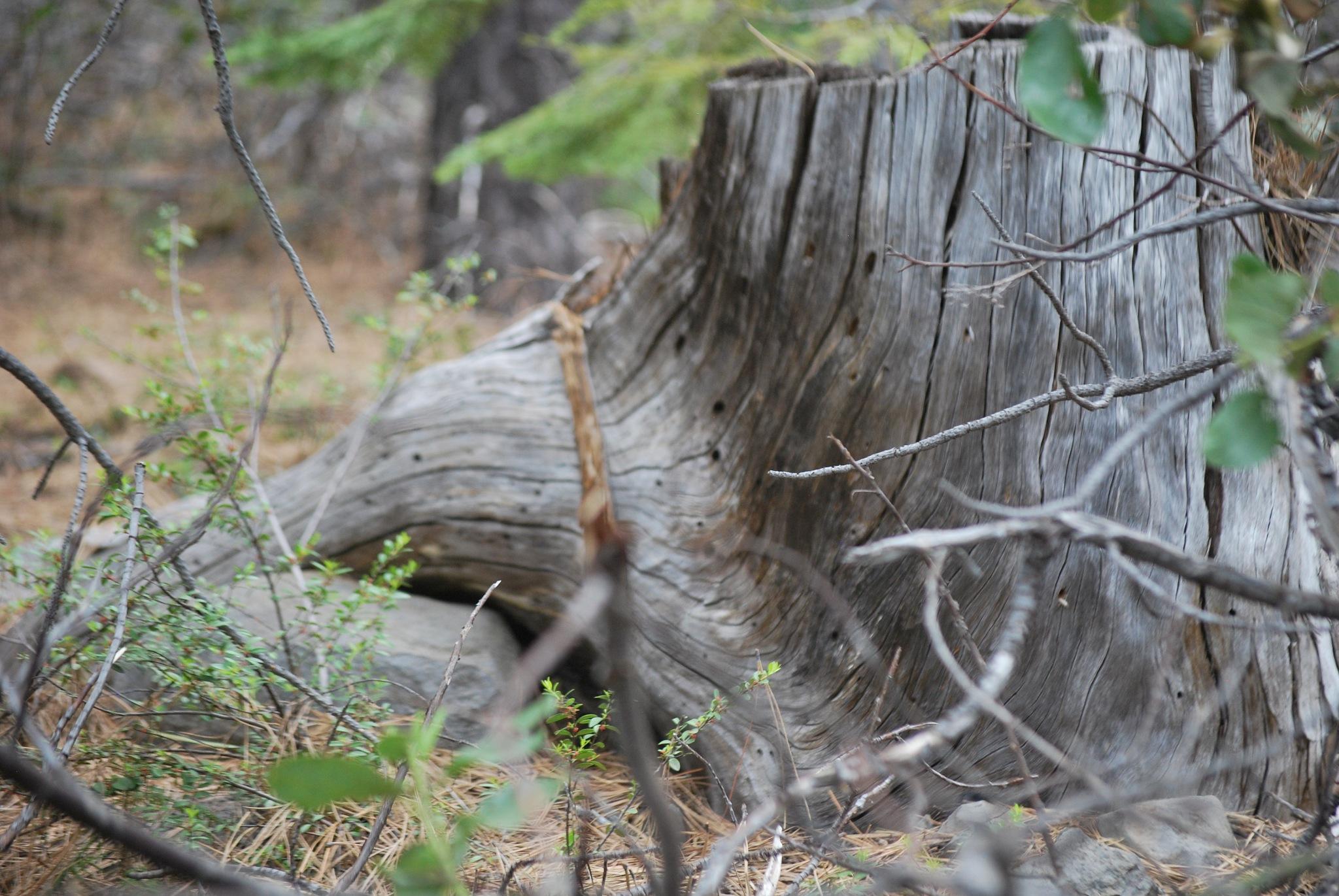 The stump by marilyn wirtz