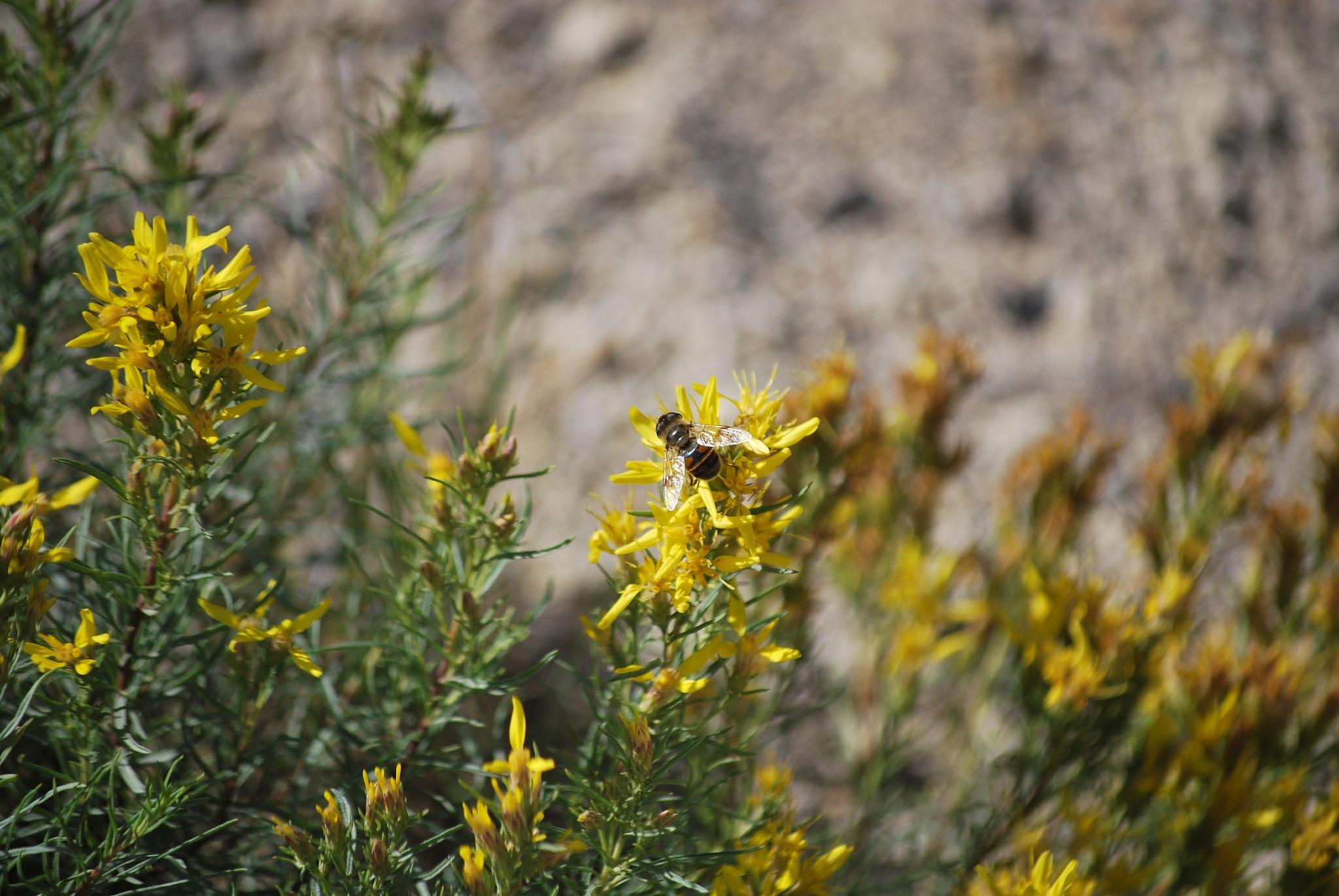Bee by marilyn Simkin