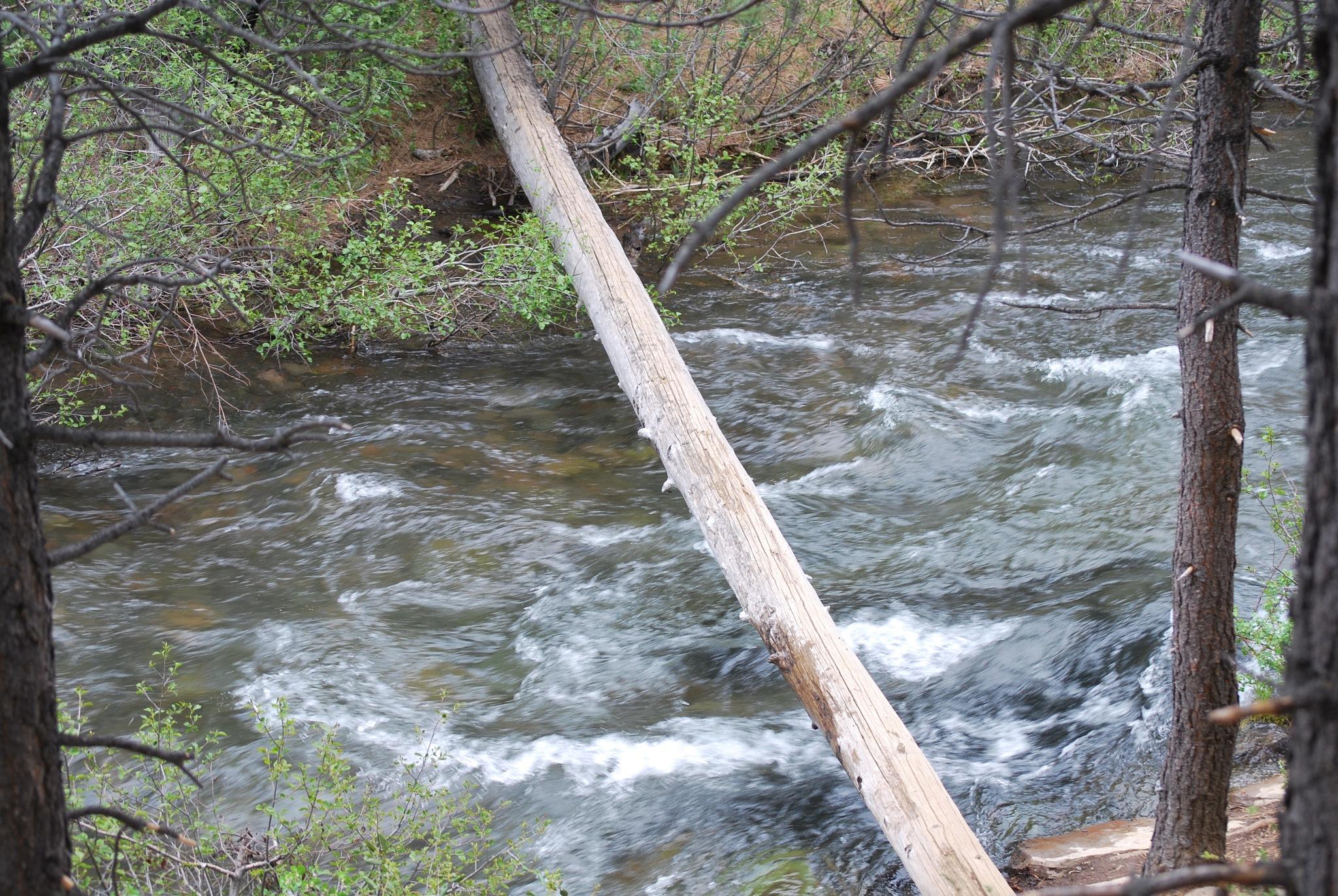 Log bridge by marilyn wirtz