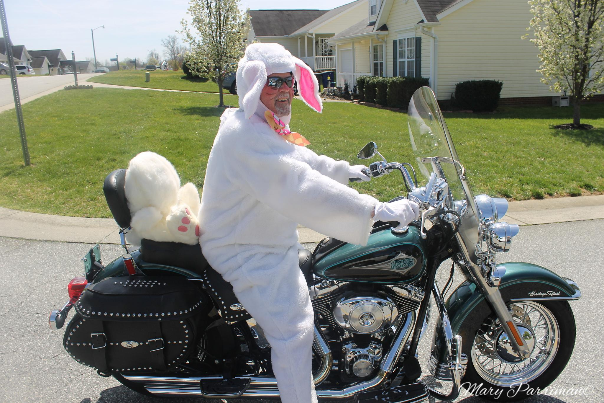 The Cool Easter Bunny by mary parriman