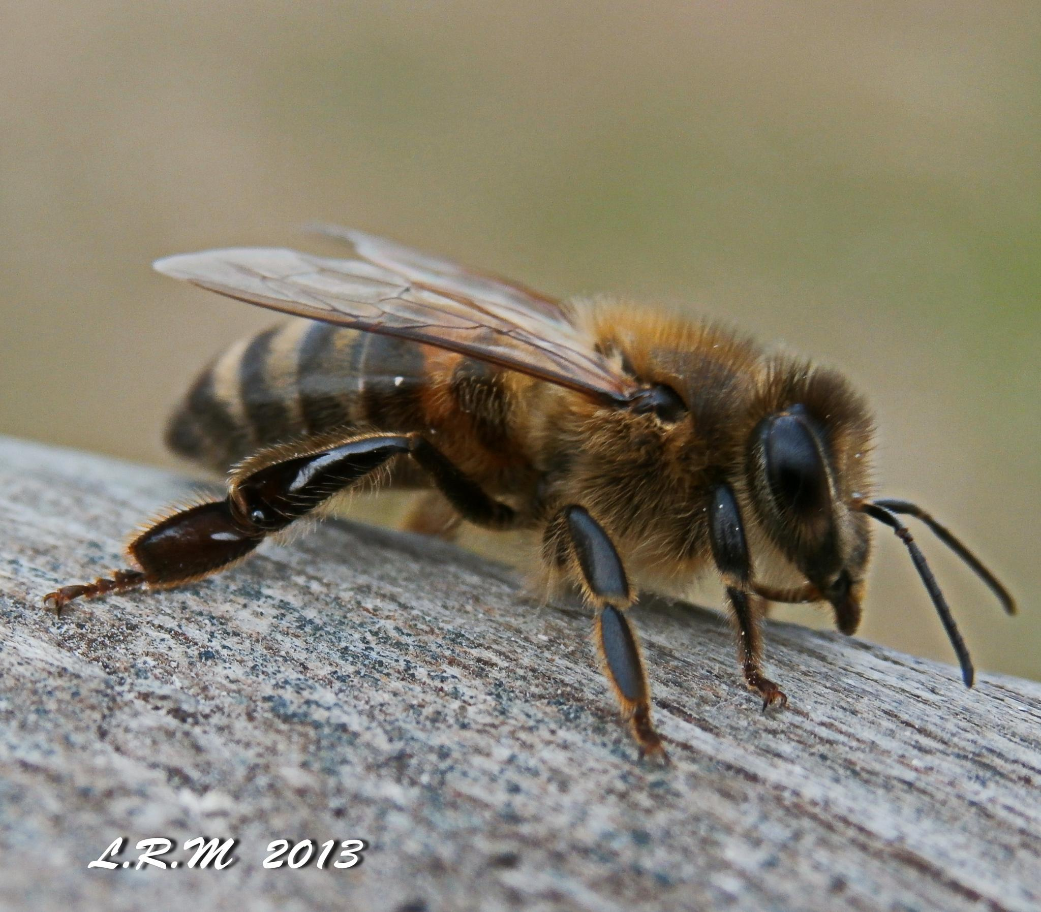 Bee by kymomma1977