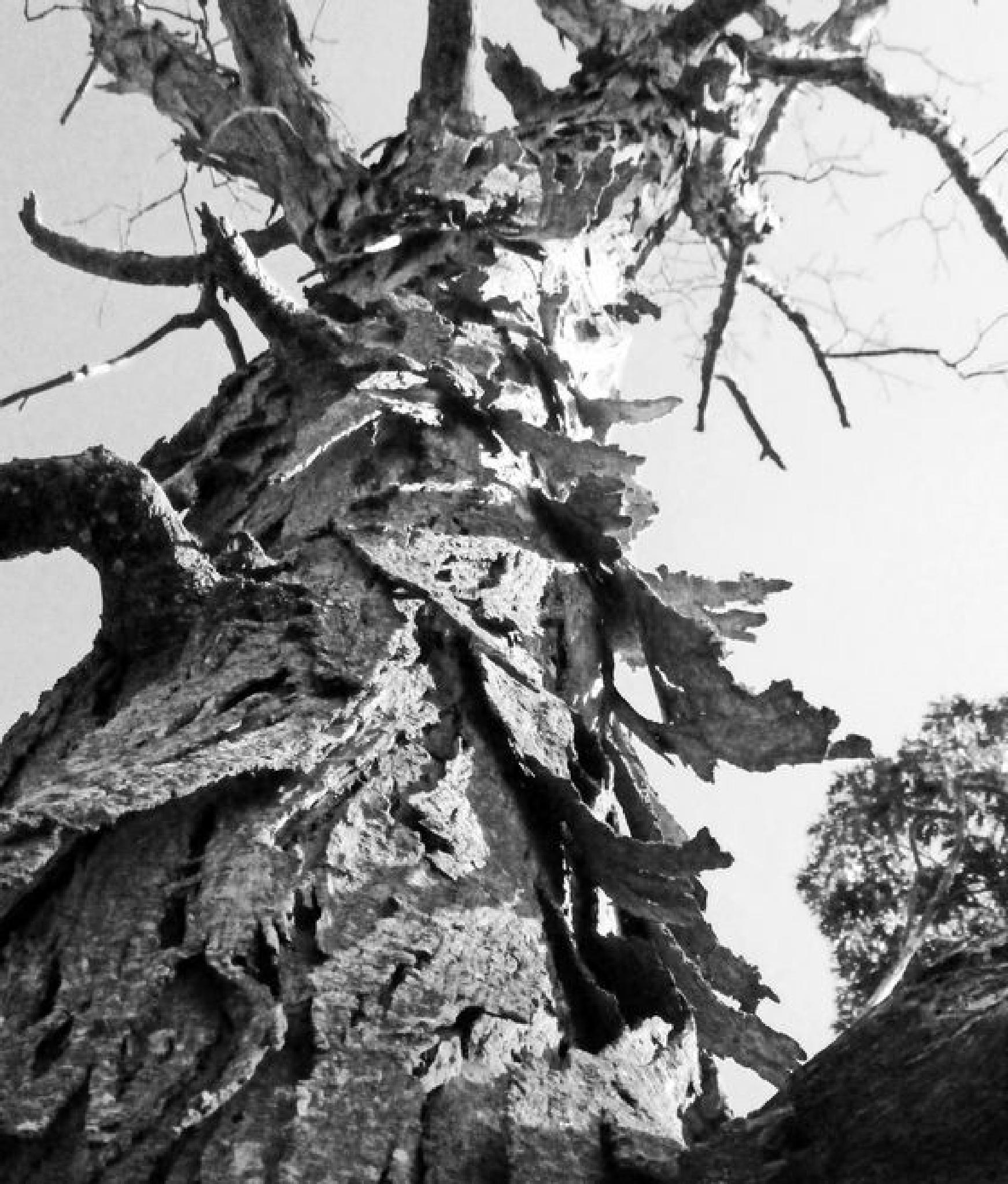 Old Tree by kymomma1977