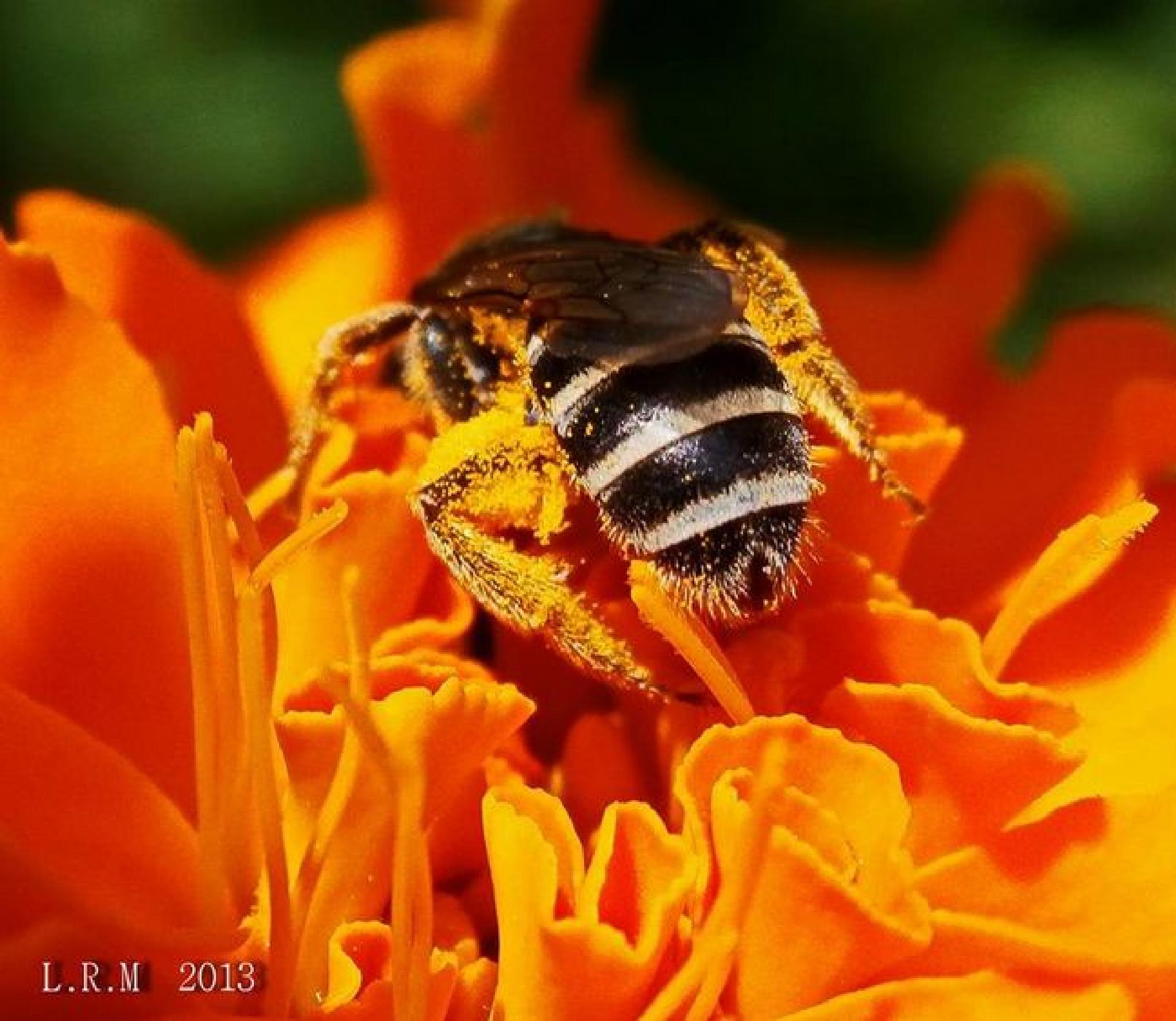 Bee pollinating by kymomma1977