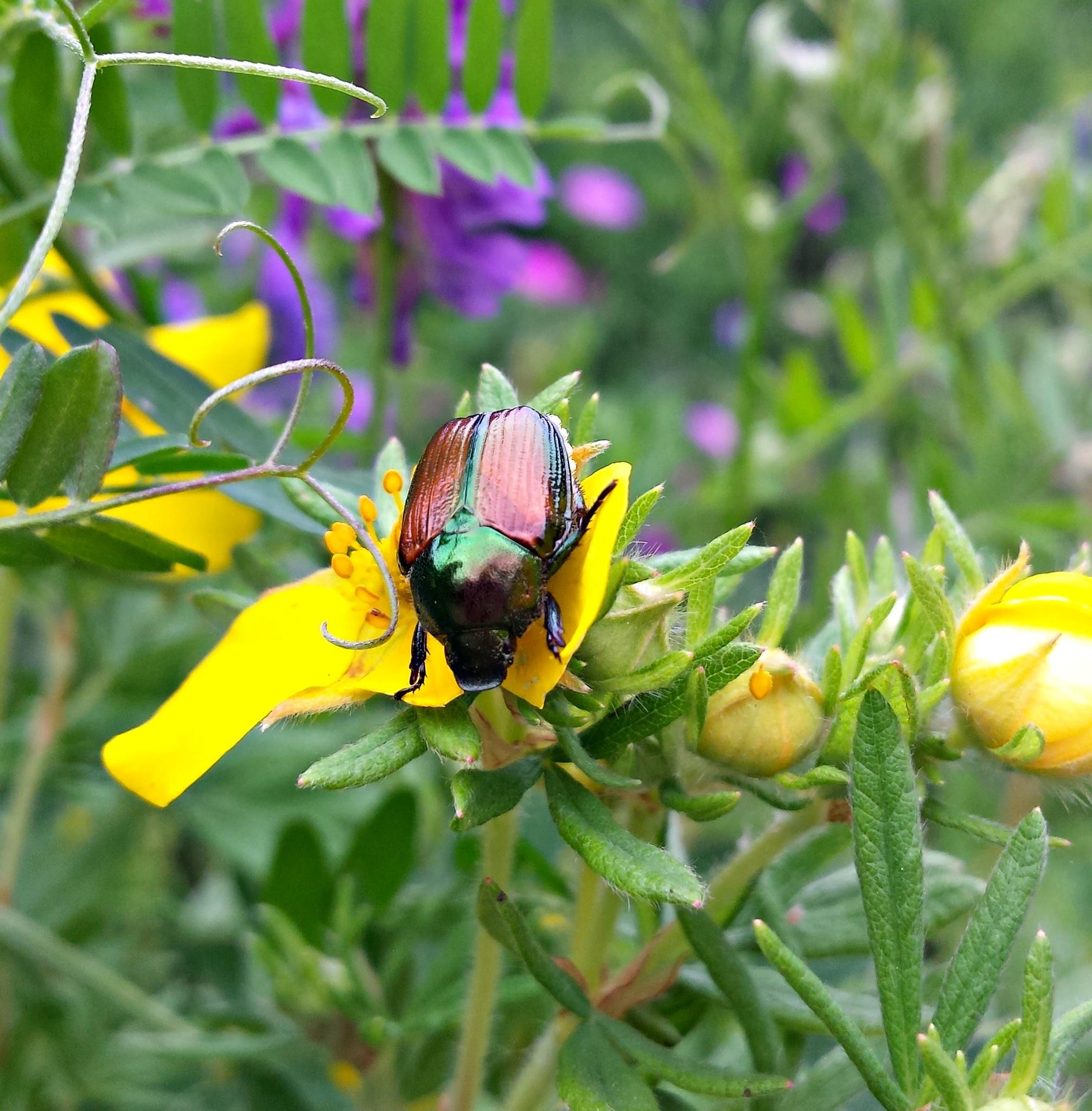 Beetle by Janice Bradford