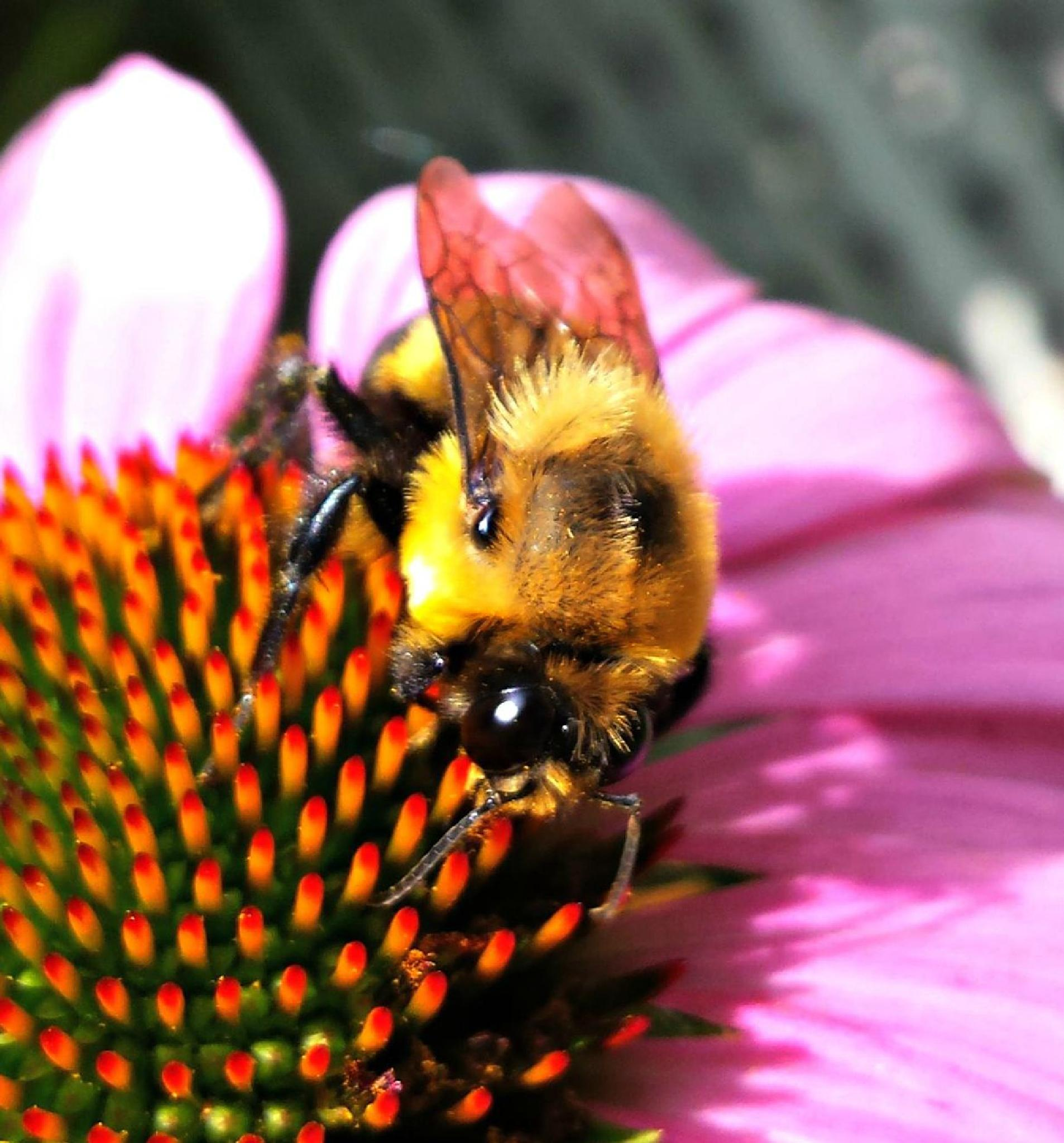 Busy Bee by Janice Bradford
