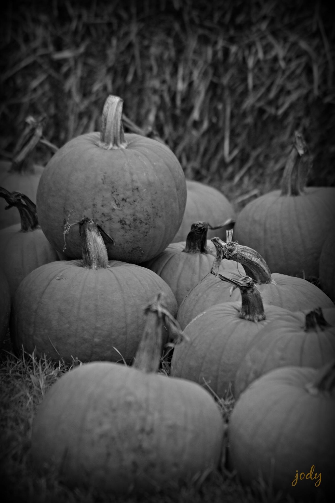 BW Pumpkins 2016 by JoEllen Adams