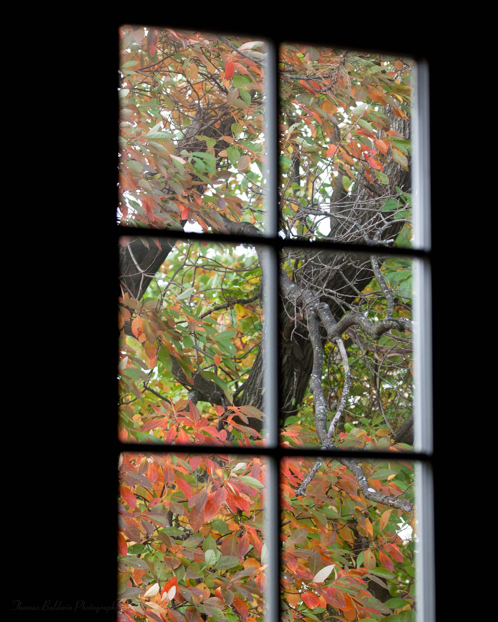 Autumn From Inside by Thomas Baldwin