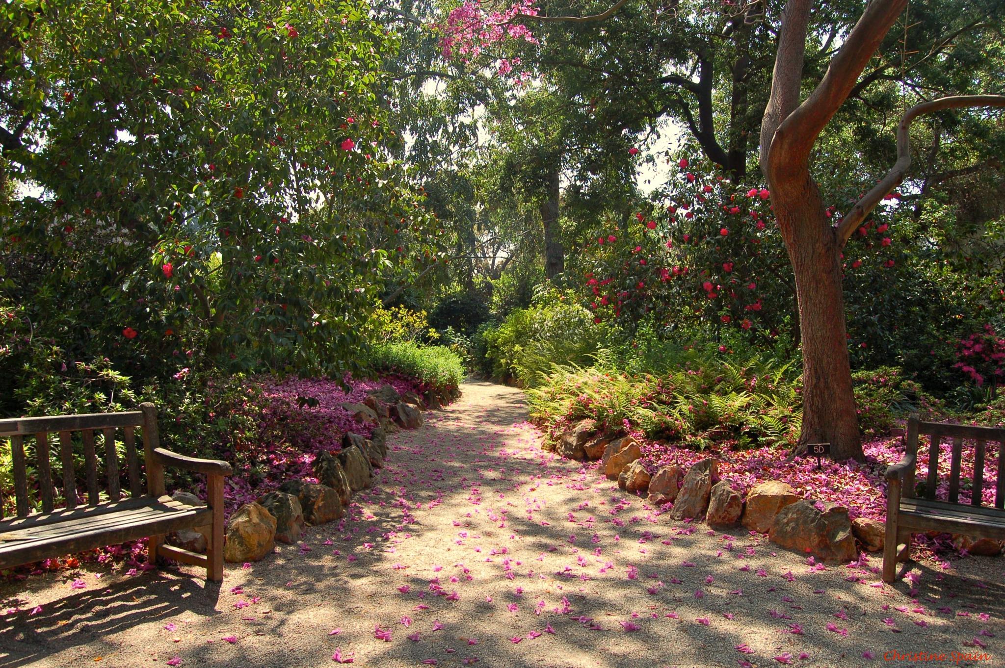 Garden Path by christine.spain