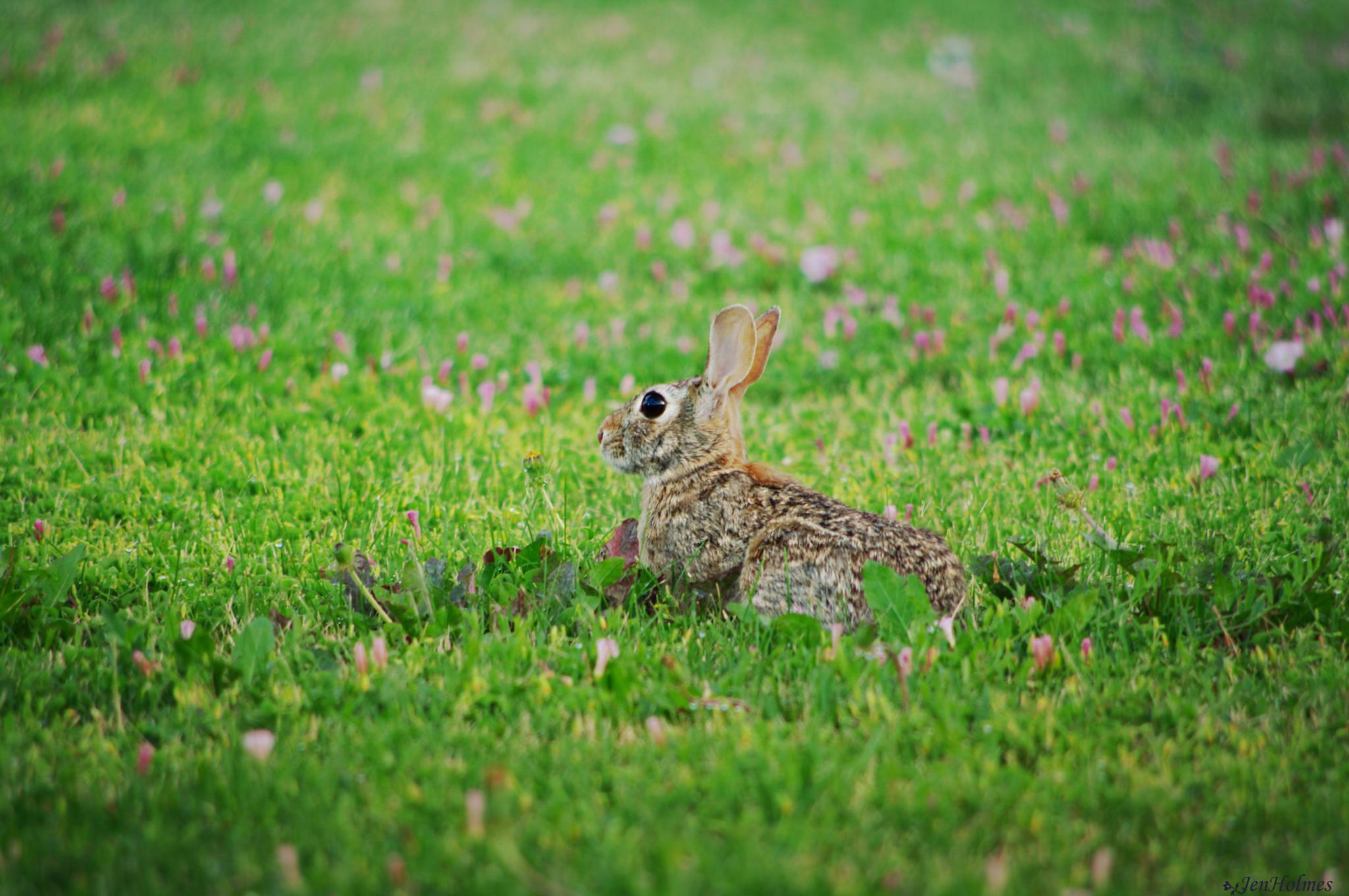 The 'Rabbit Whisperer' strikes again by jennifer.holmes.357
