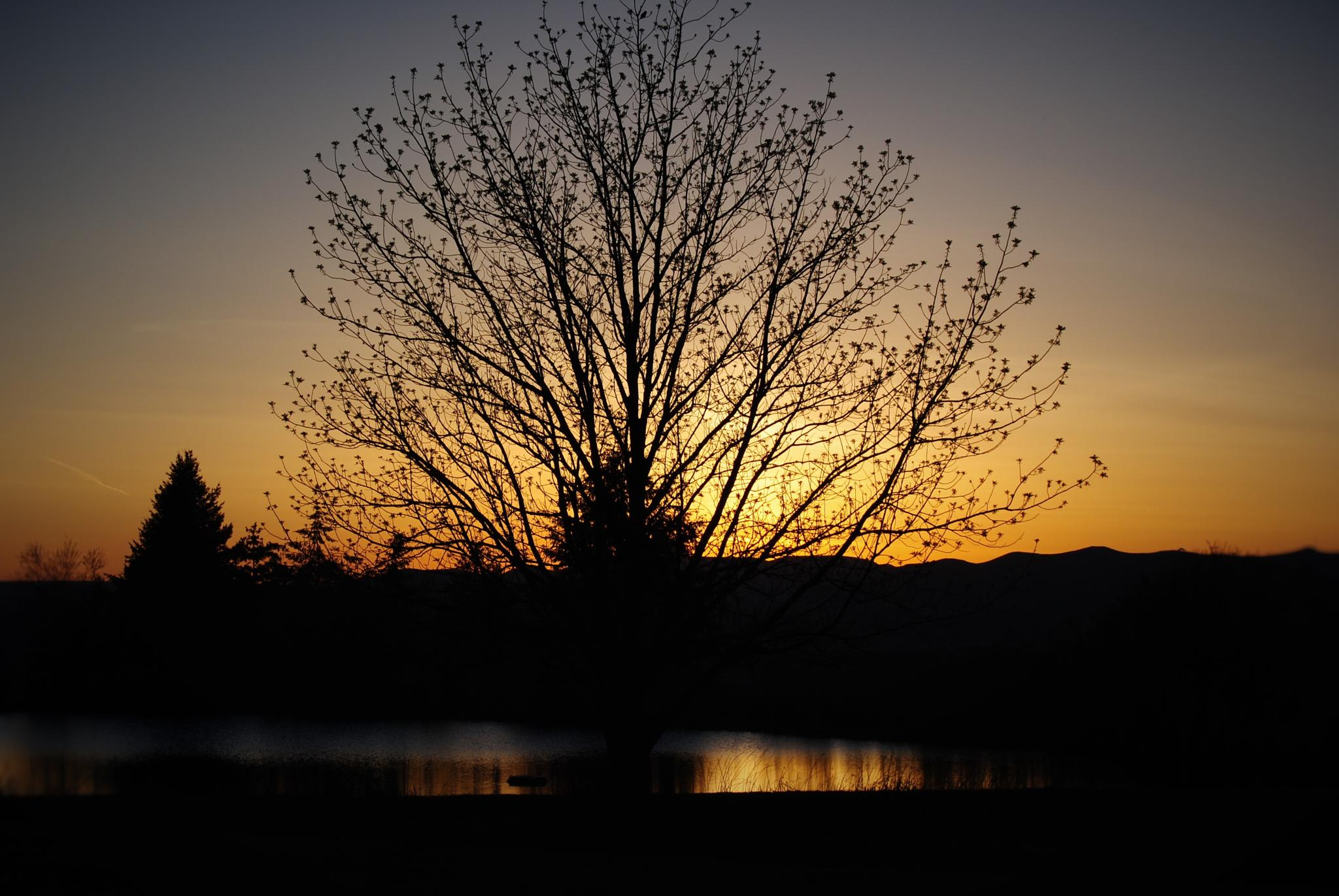 Sunset at the golf club by sandra.n.erhardt