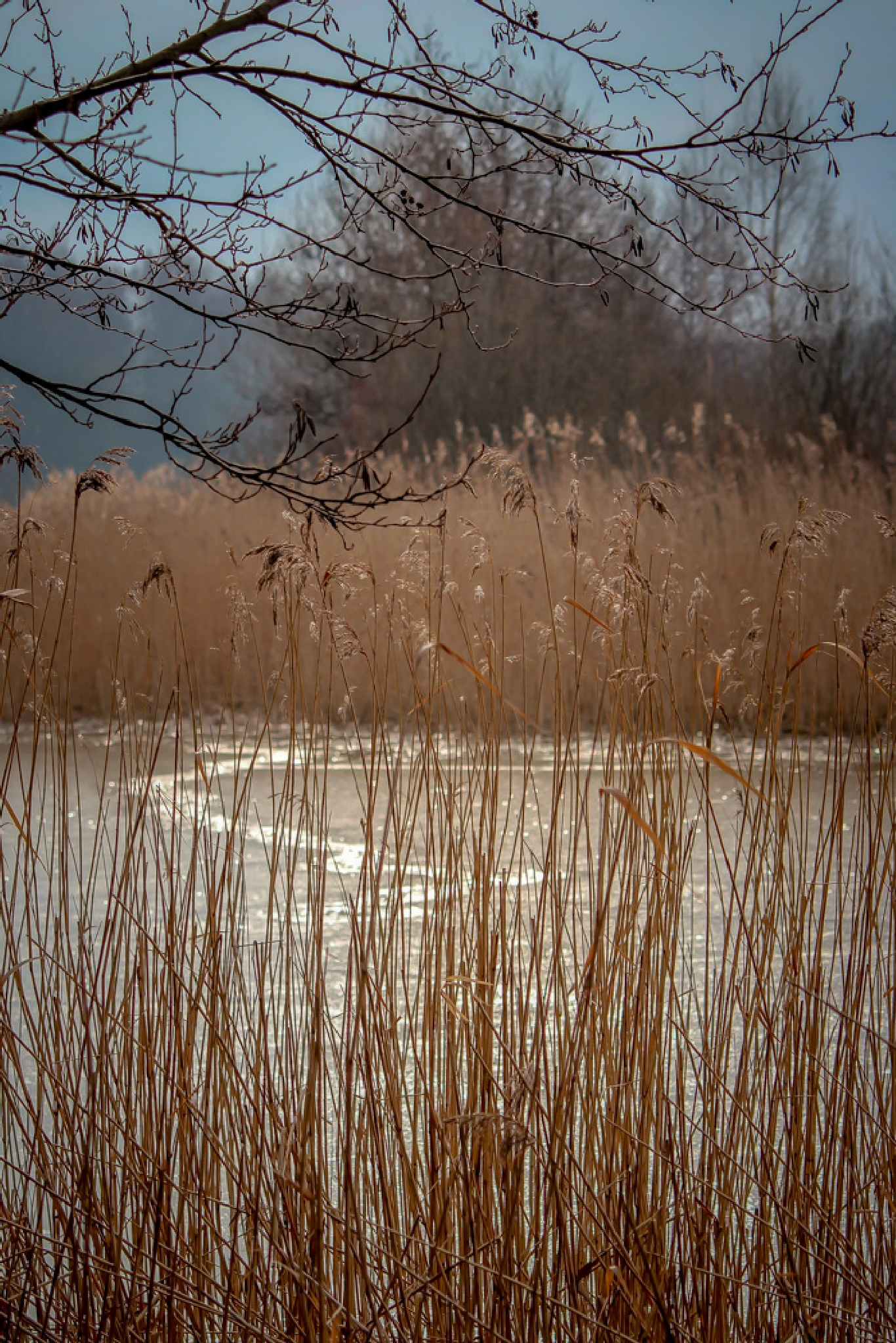 Ice covered pond 2 by barbro.hansson.9
