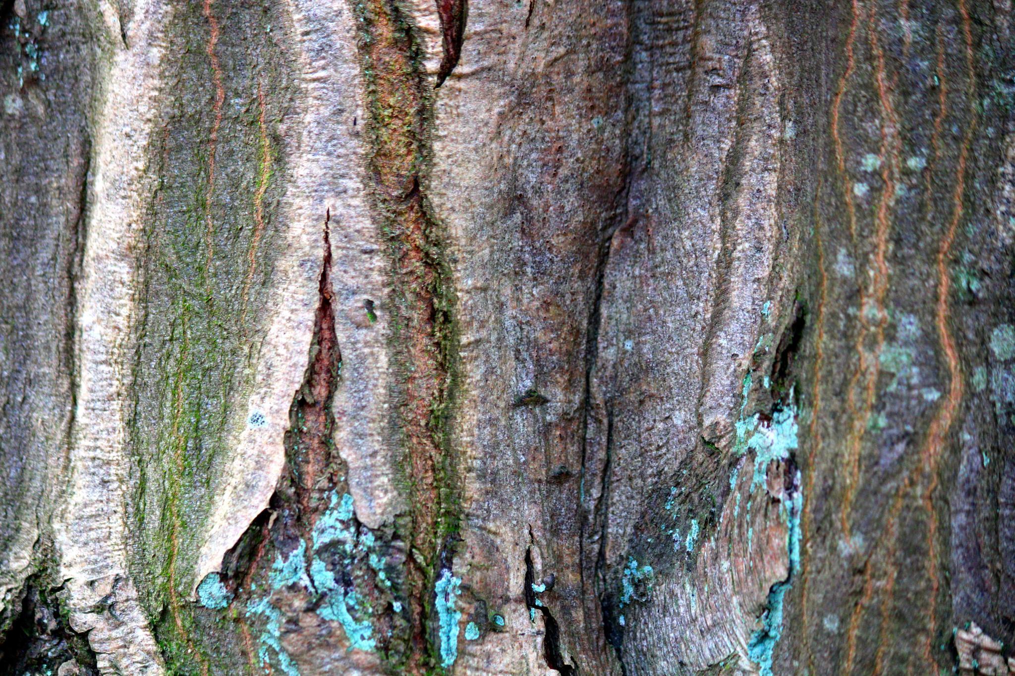 Treetrunk by barbro.hansson.9