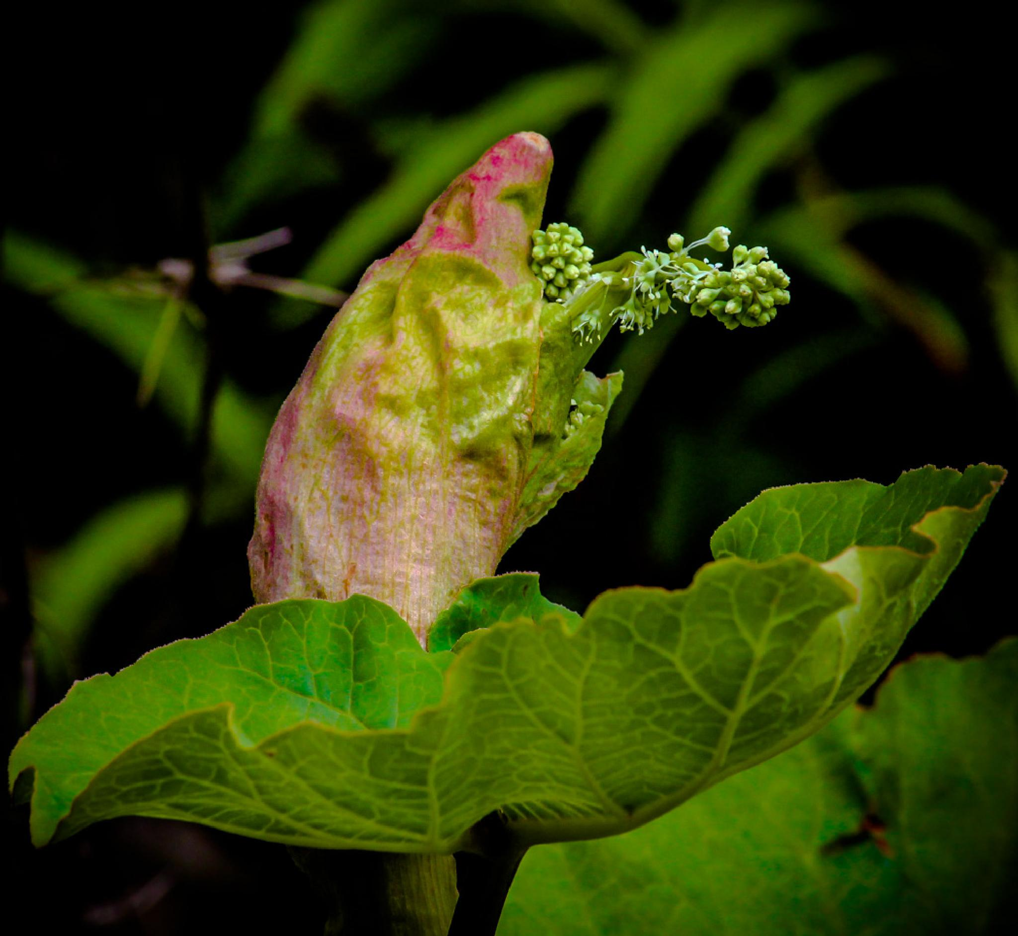 Exotic plant by barbro.hansson.9