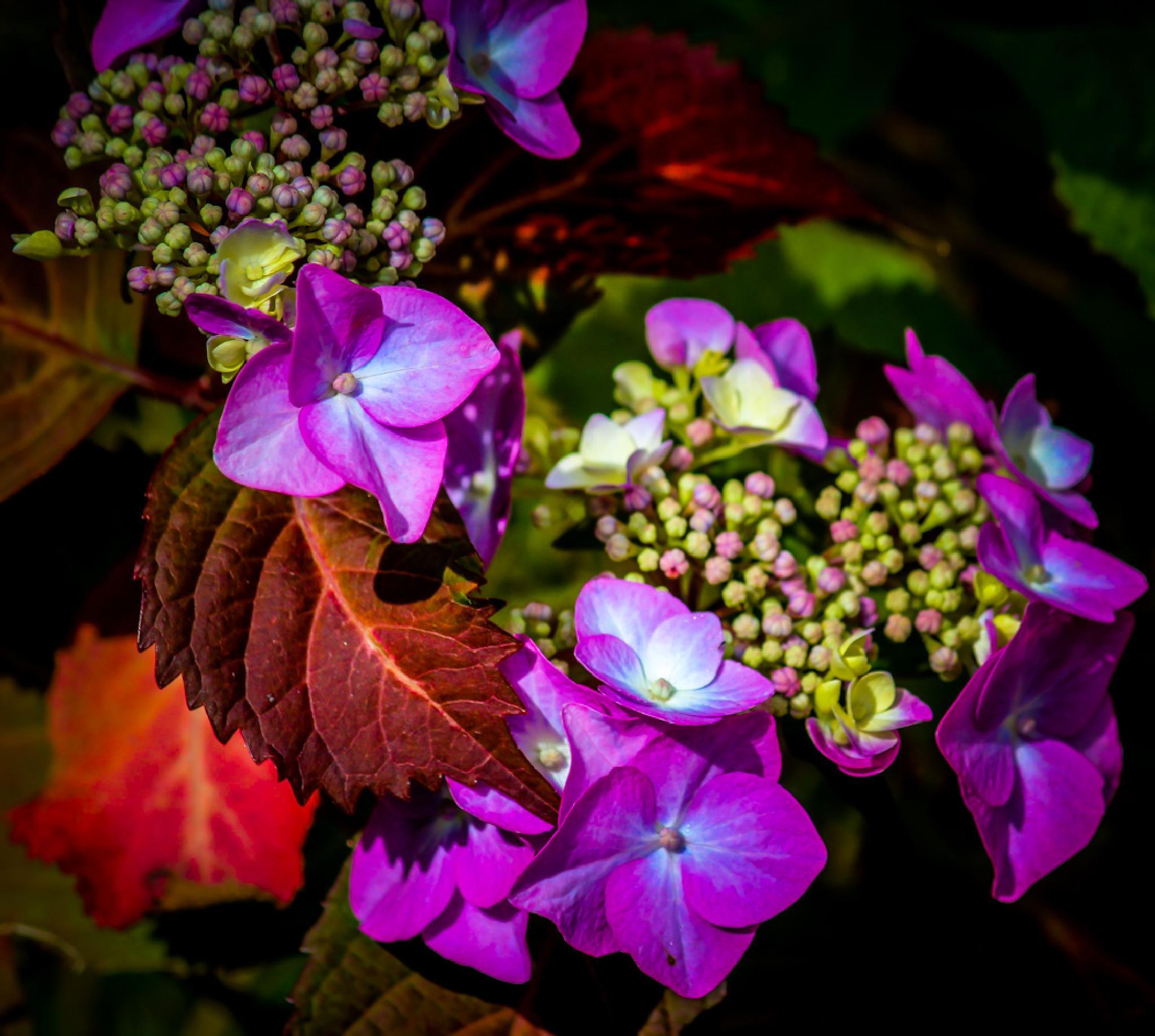 Photo in Random #nature #hydrangea #close-up