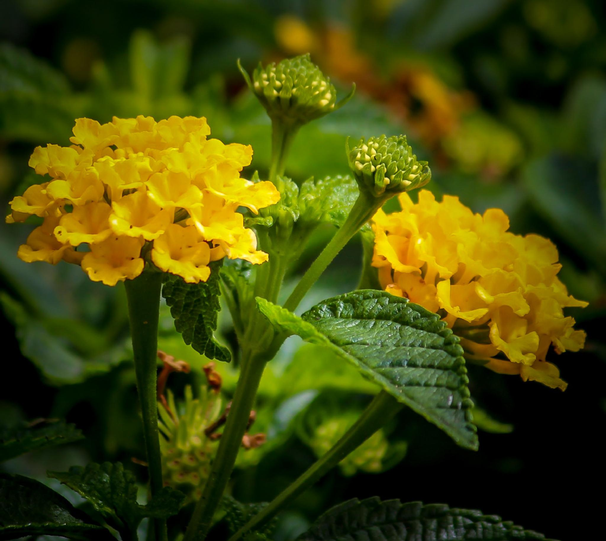 Yellow and yellow by barbro.hansson.9