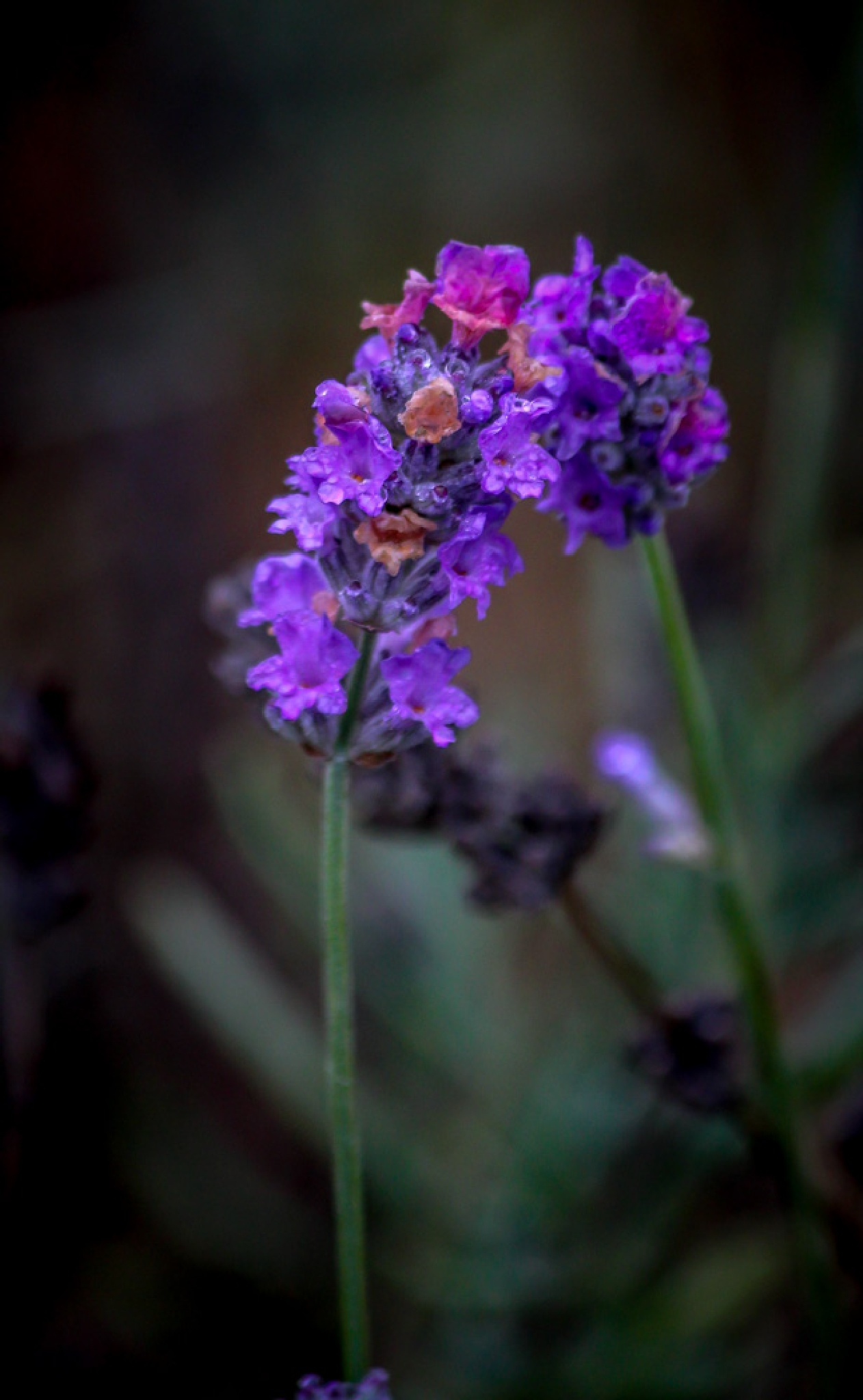 Purple flowers by barbro.hansson.9