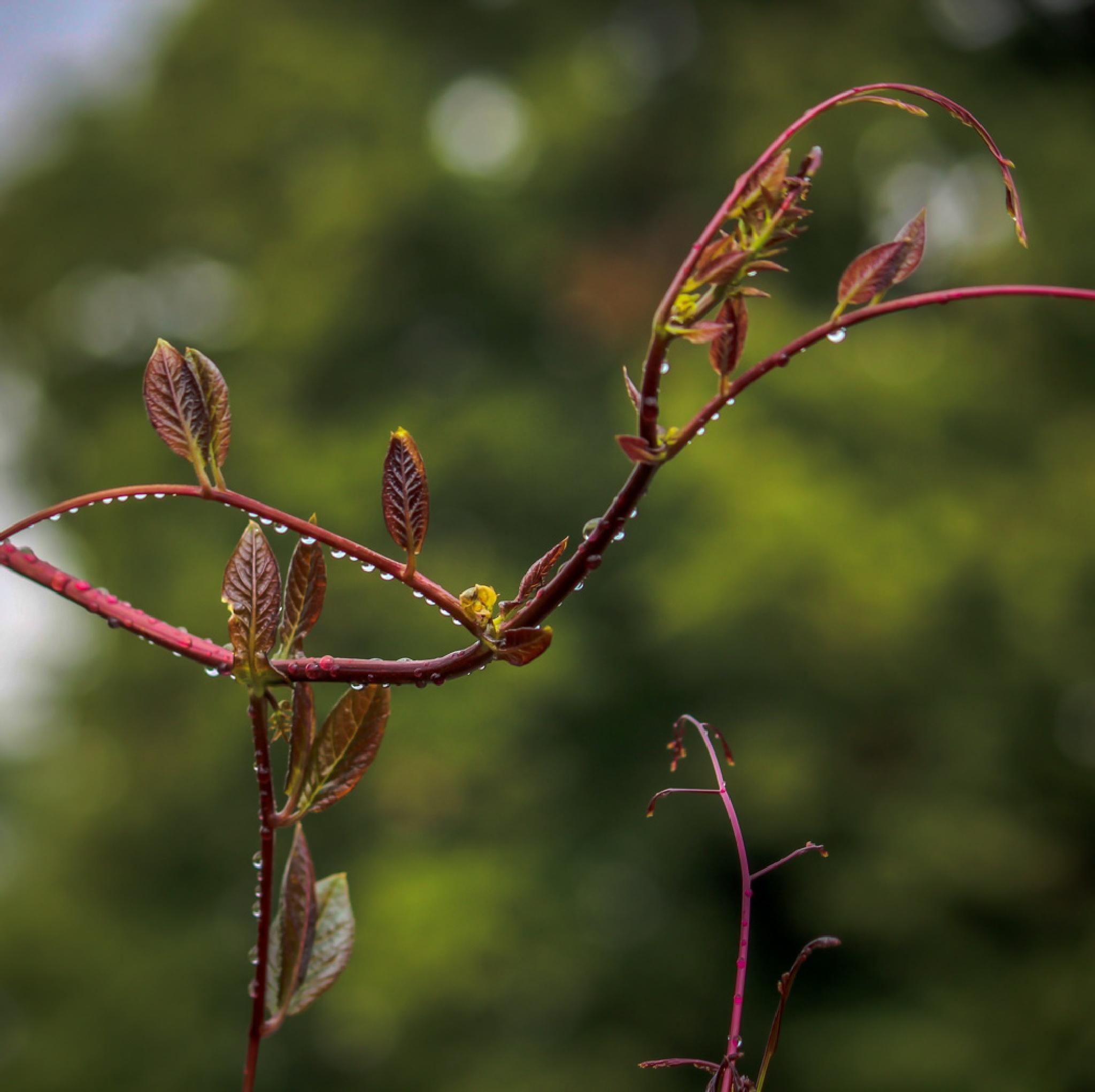 Leaves in rain by barbro.hansson.9
