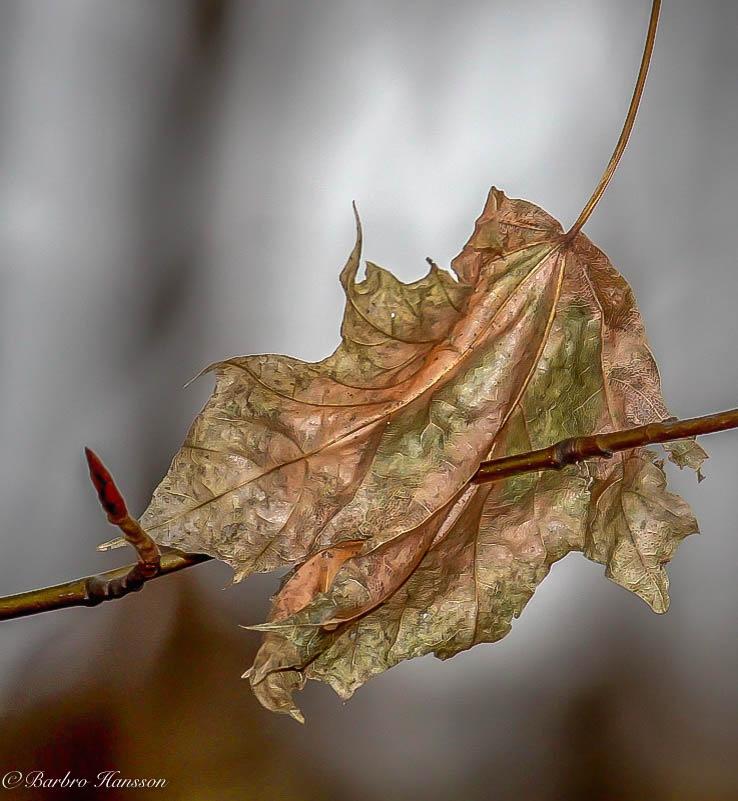 Falling leaf by barbro.hansson.9