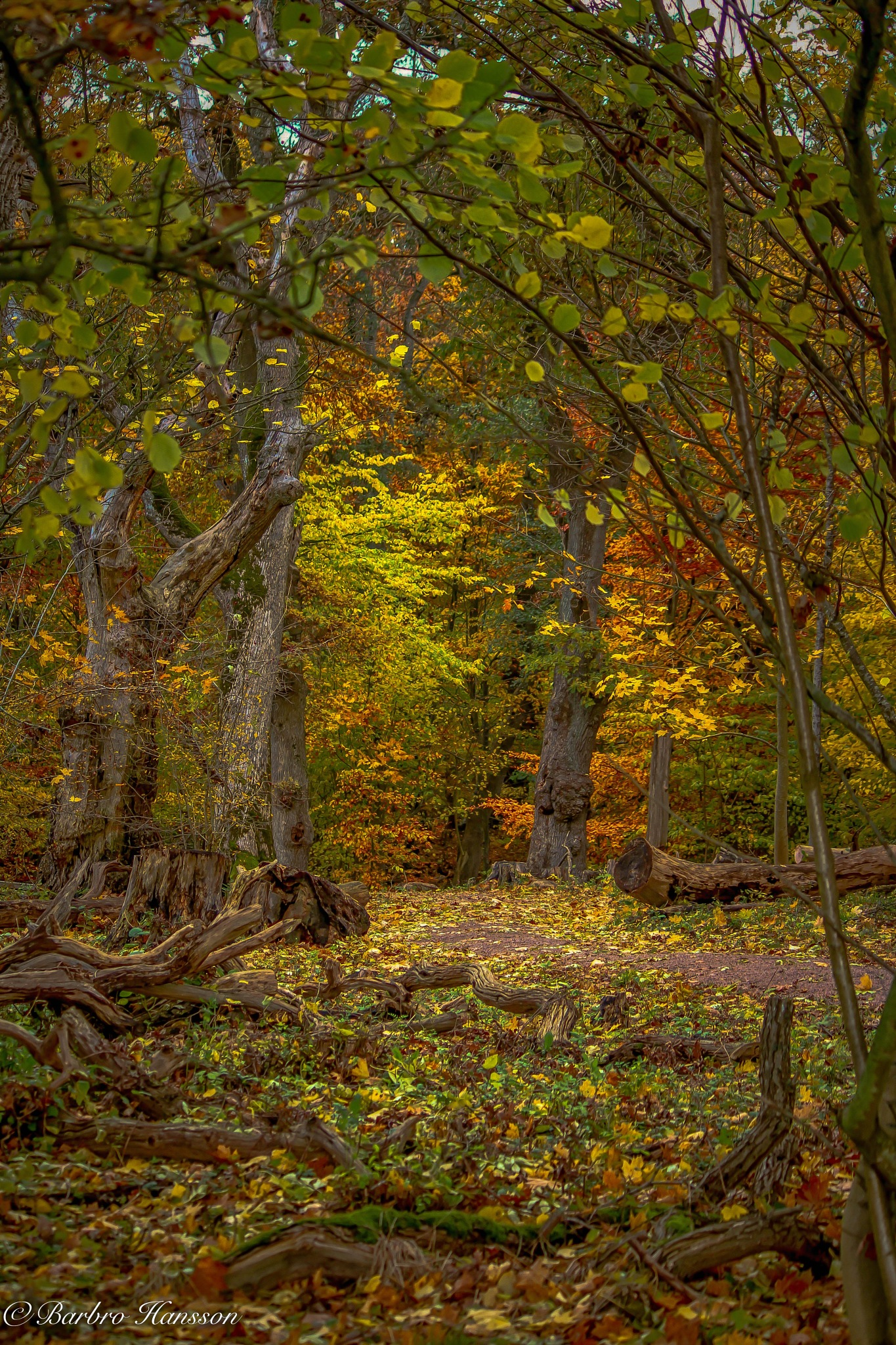 Autumn in the forest by barbro.hansson.9